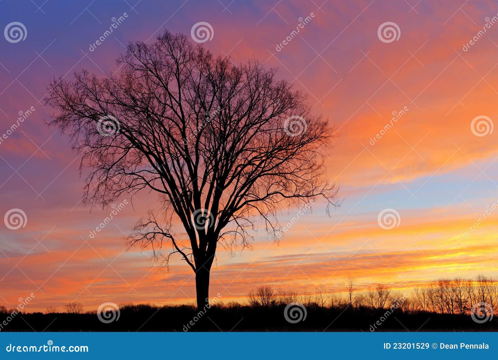 Árboles descubiertos en el amanecer