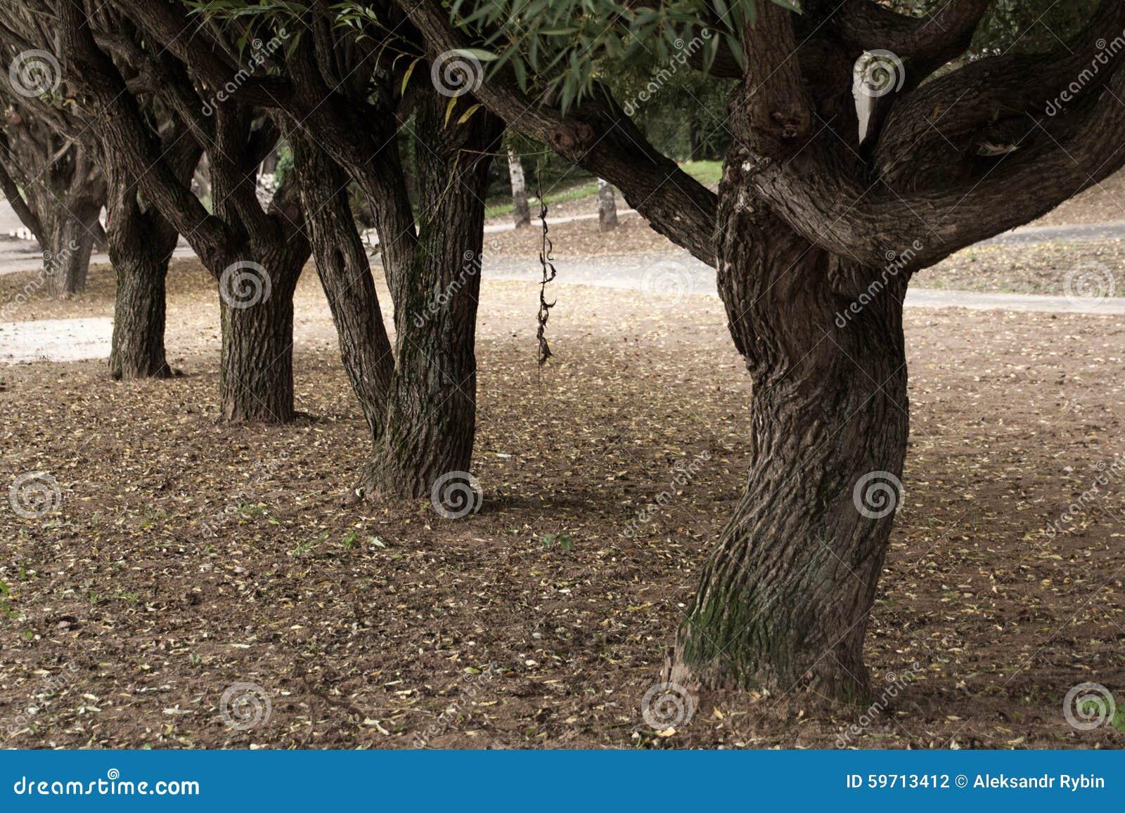 Árboles en Autumn Park