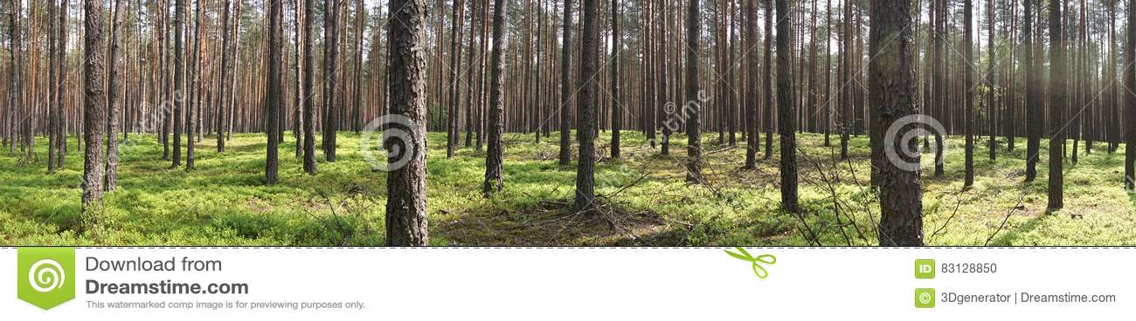 Árboles en bosque