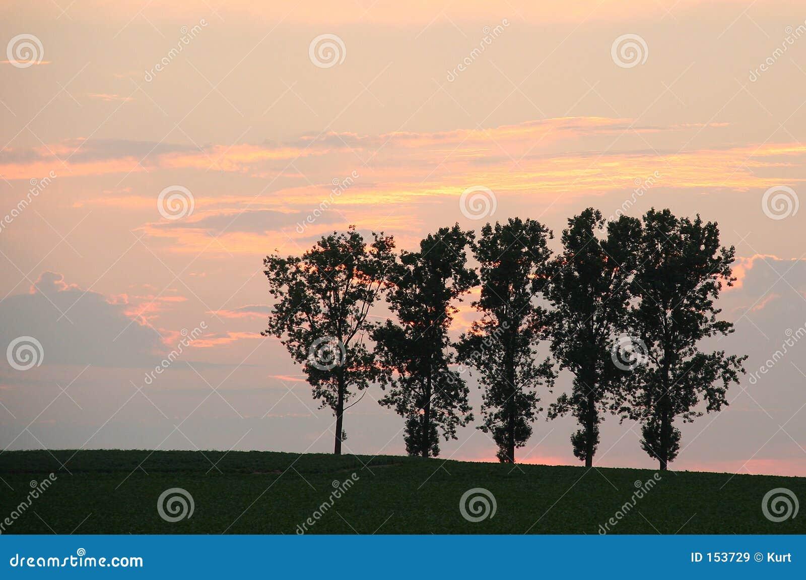 Árboles en campo