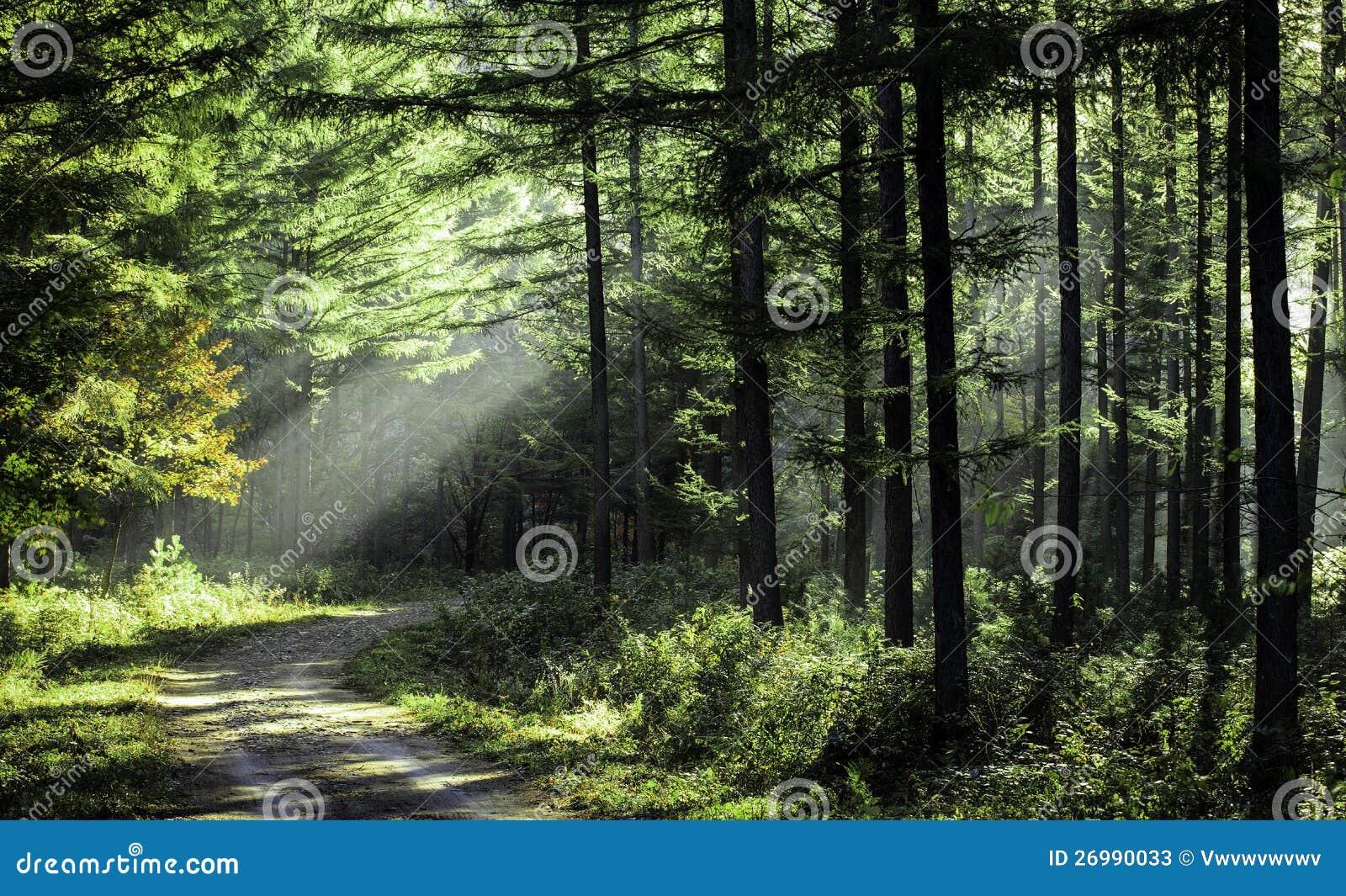 Árboles en el sol de la mañana