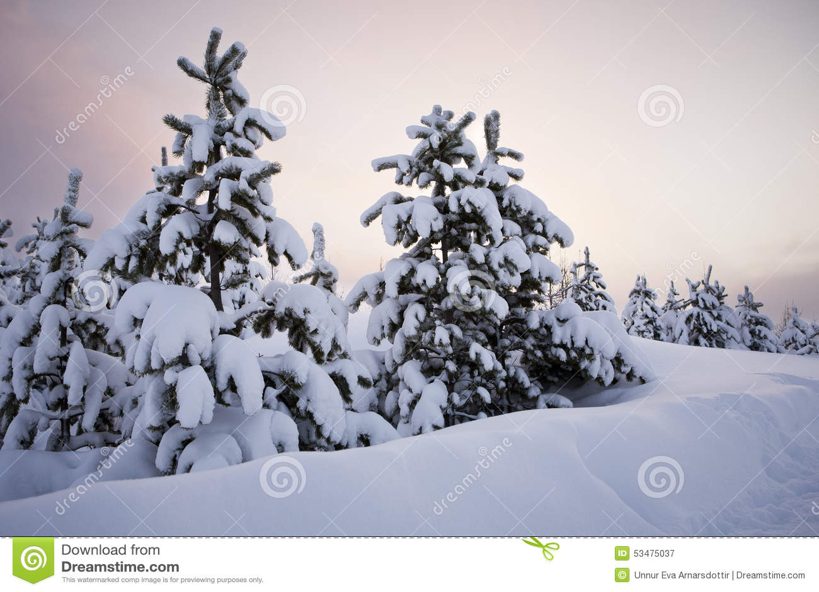Árboles en nieve