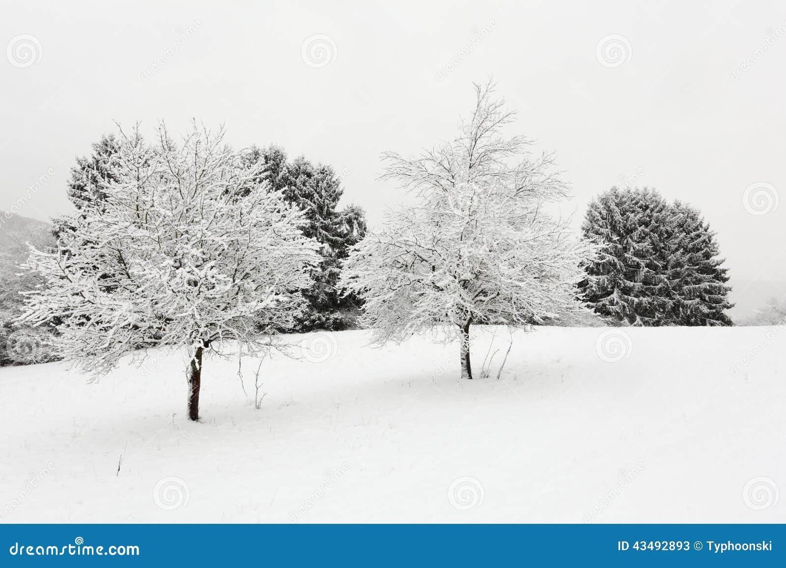 Árboles en paisaje del invierno