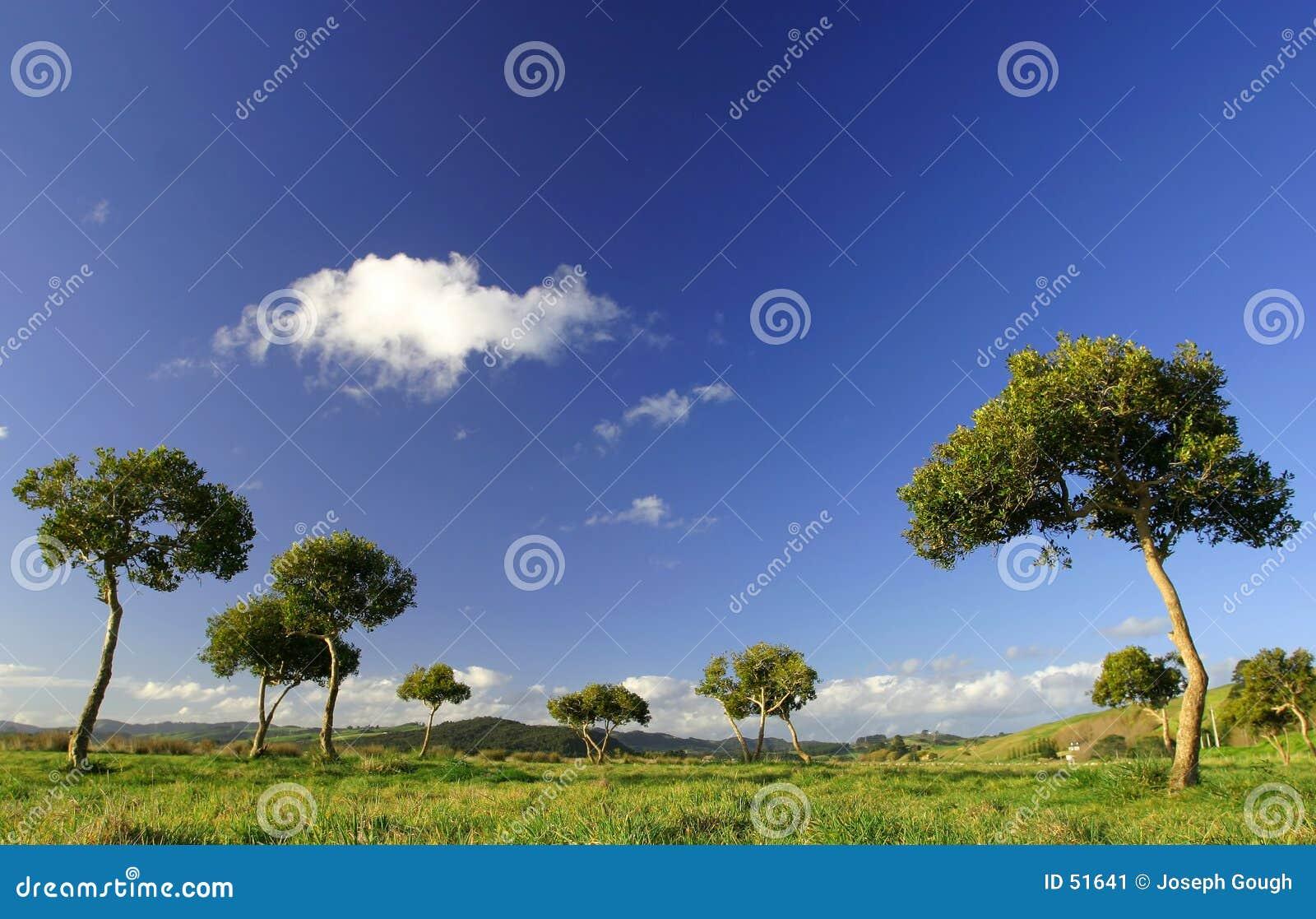 Árboles en Pukekohe