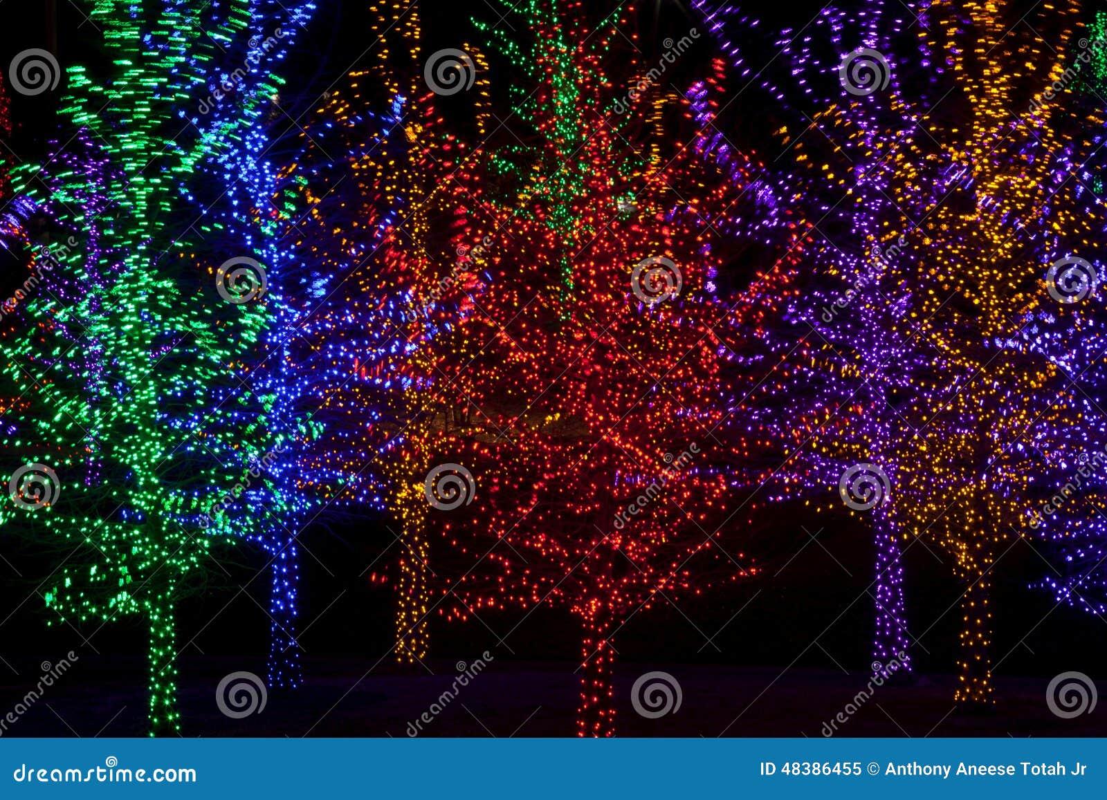 rboles envueltos en las luces led para la navidad foto de archivo