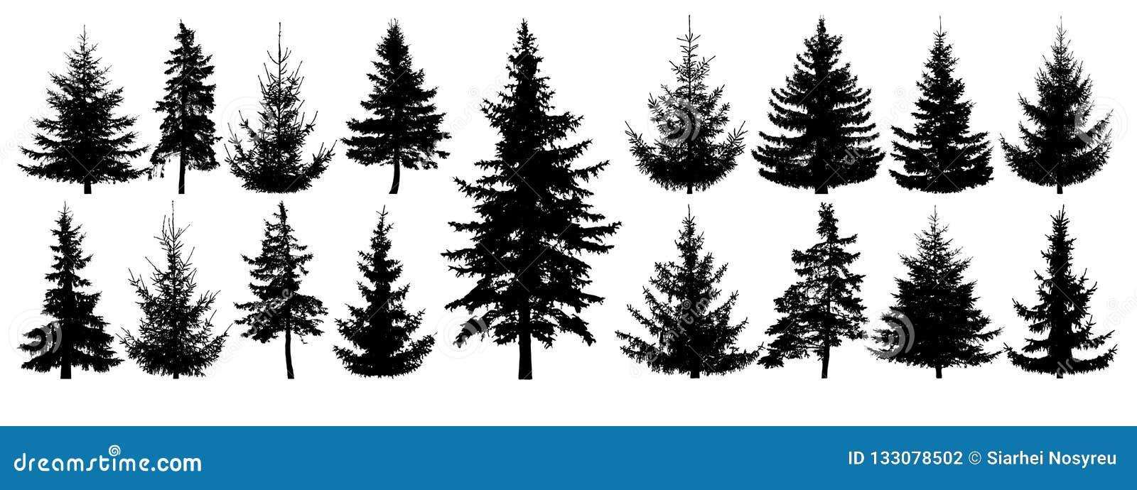 Árboles forestales fijados Silueta aislada del vector Bosque conífero