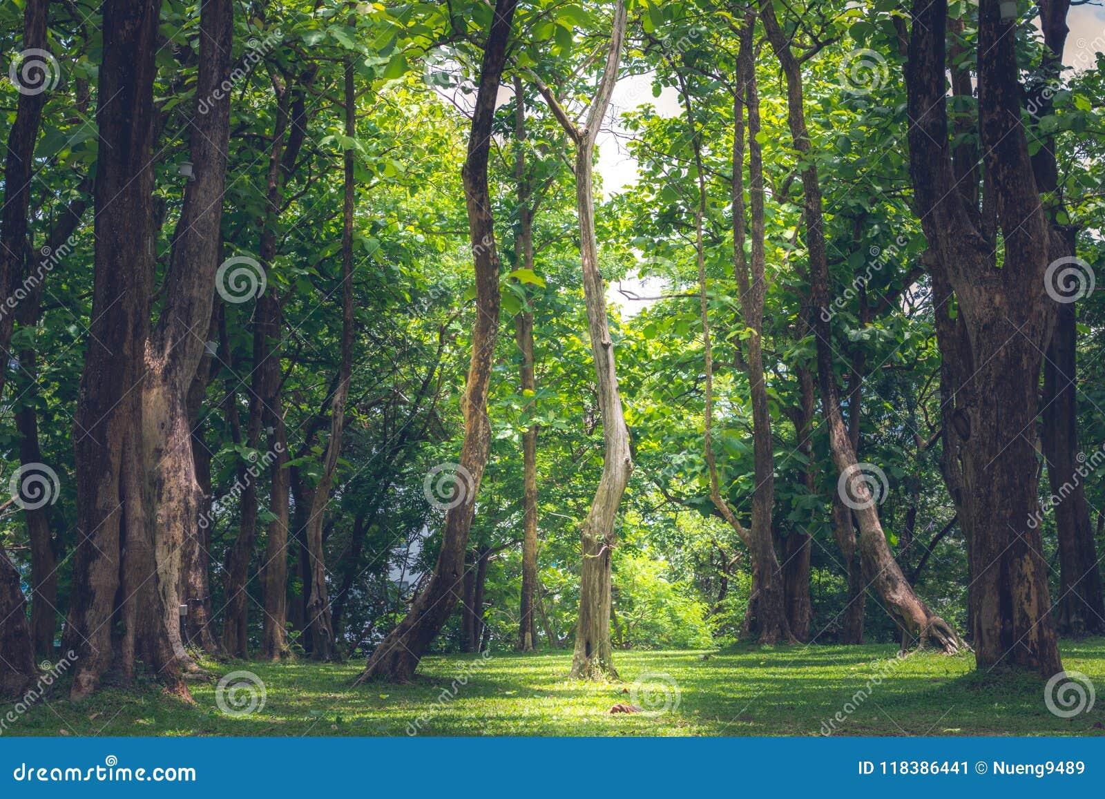 Árboles grandes en el bosque