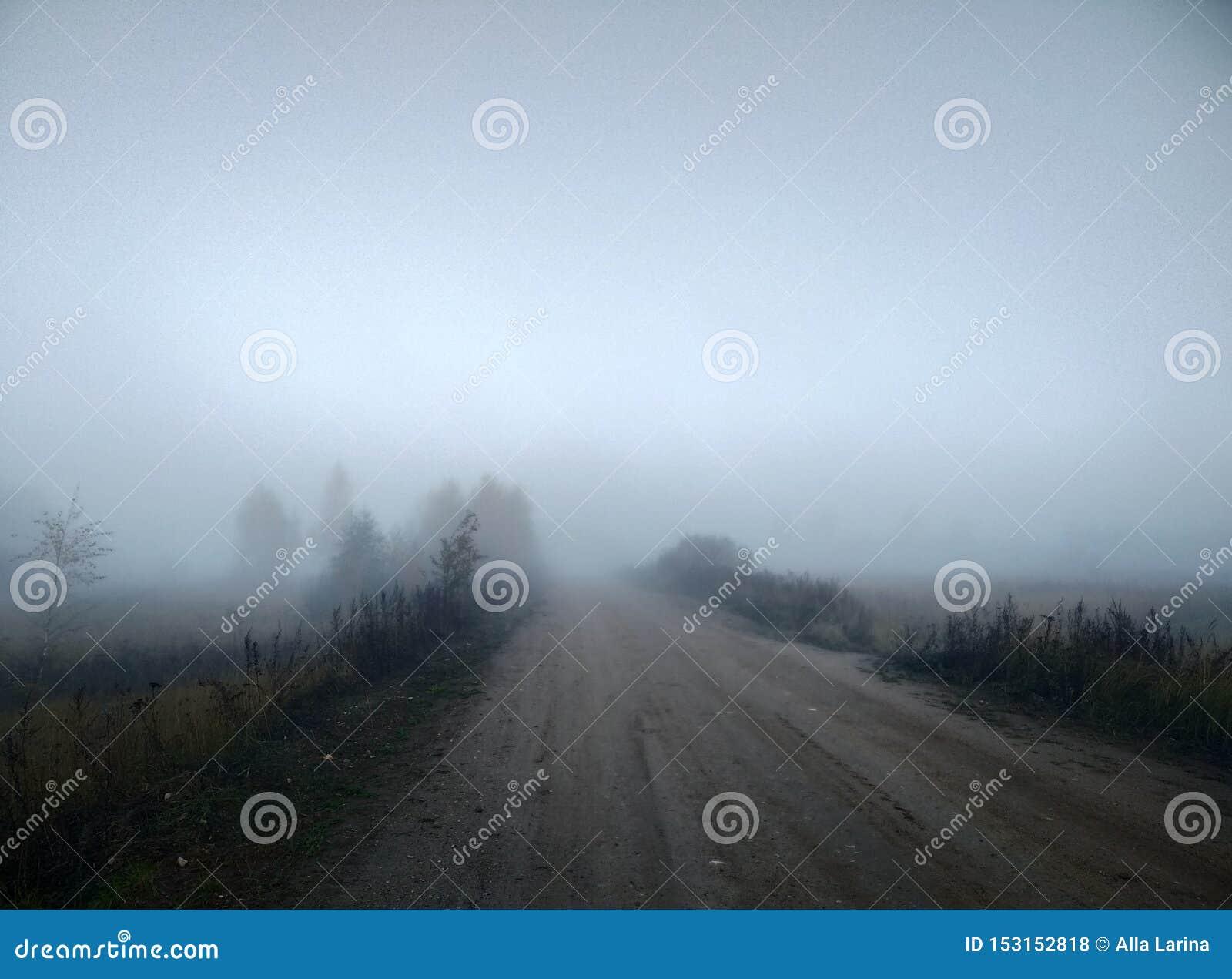 Árboles místicos del paisaje del otoño de la niebla de la mañana y papel pintado del fondo natural de la luz del sol y del camino