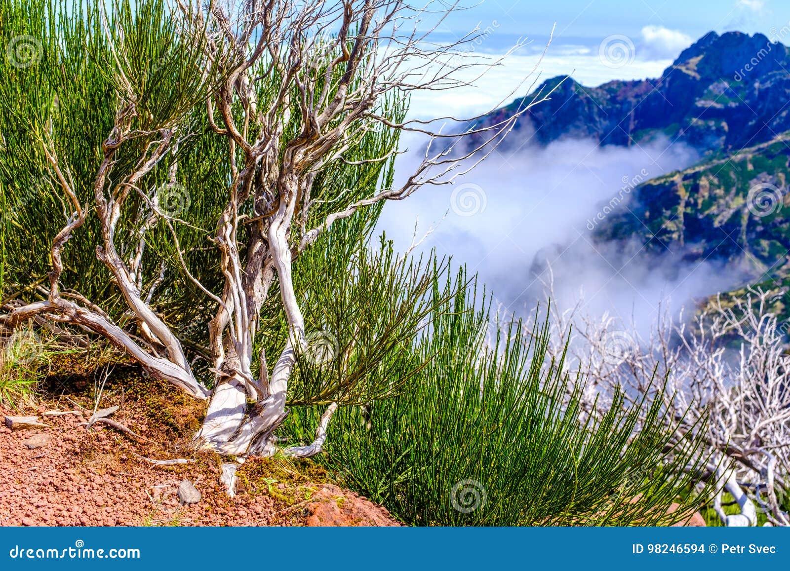 Árboles muertos altos en montañas