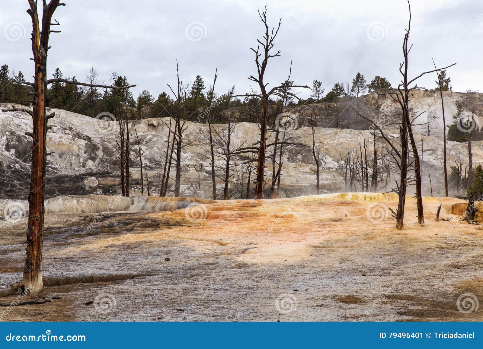 Árboles muertos en Yellowstone