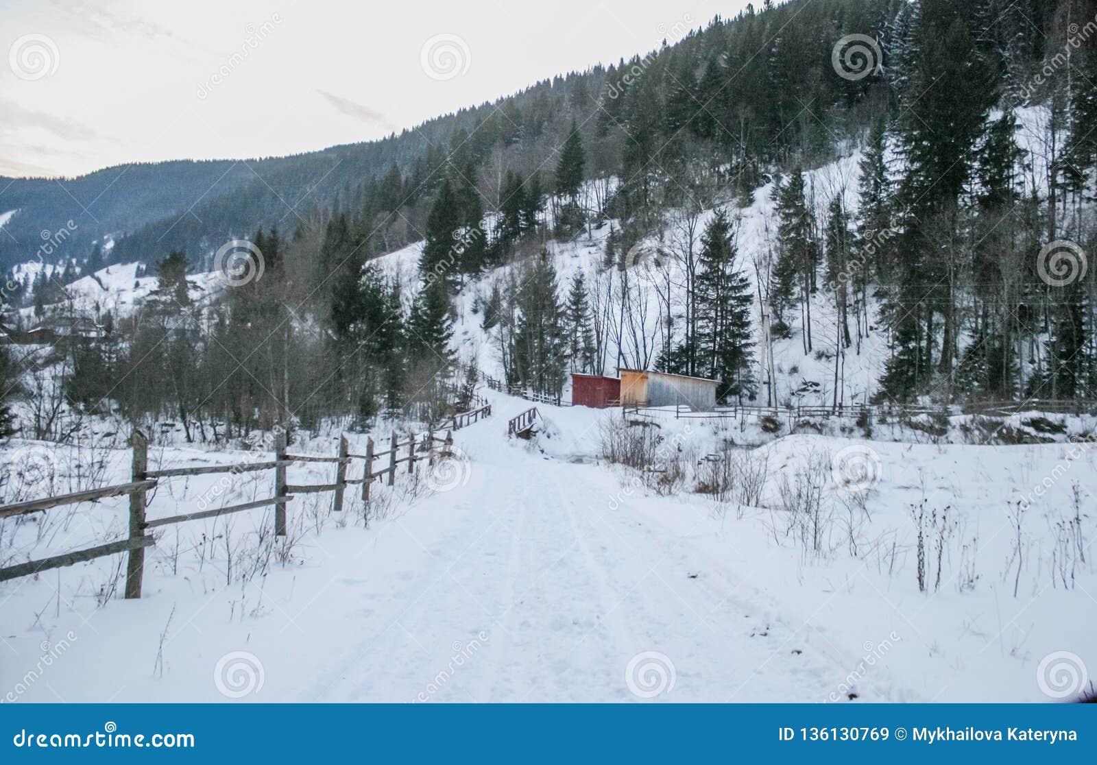 Árboles Nevado del camino nevoso y del bosque del invierno wallpaper