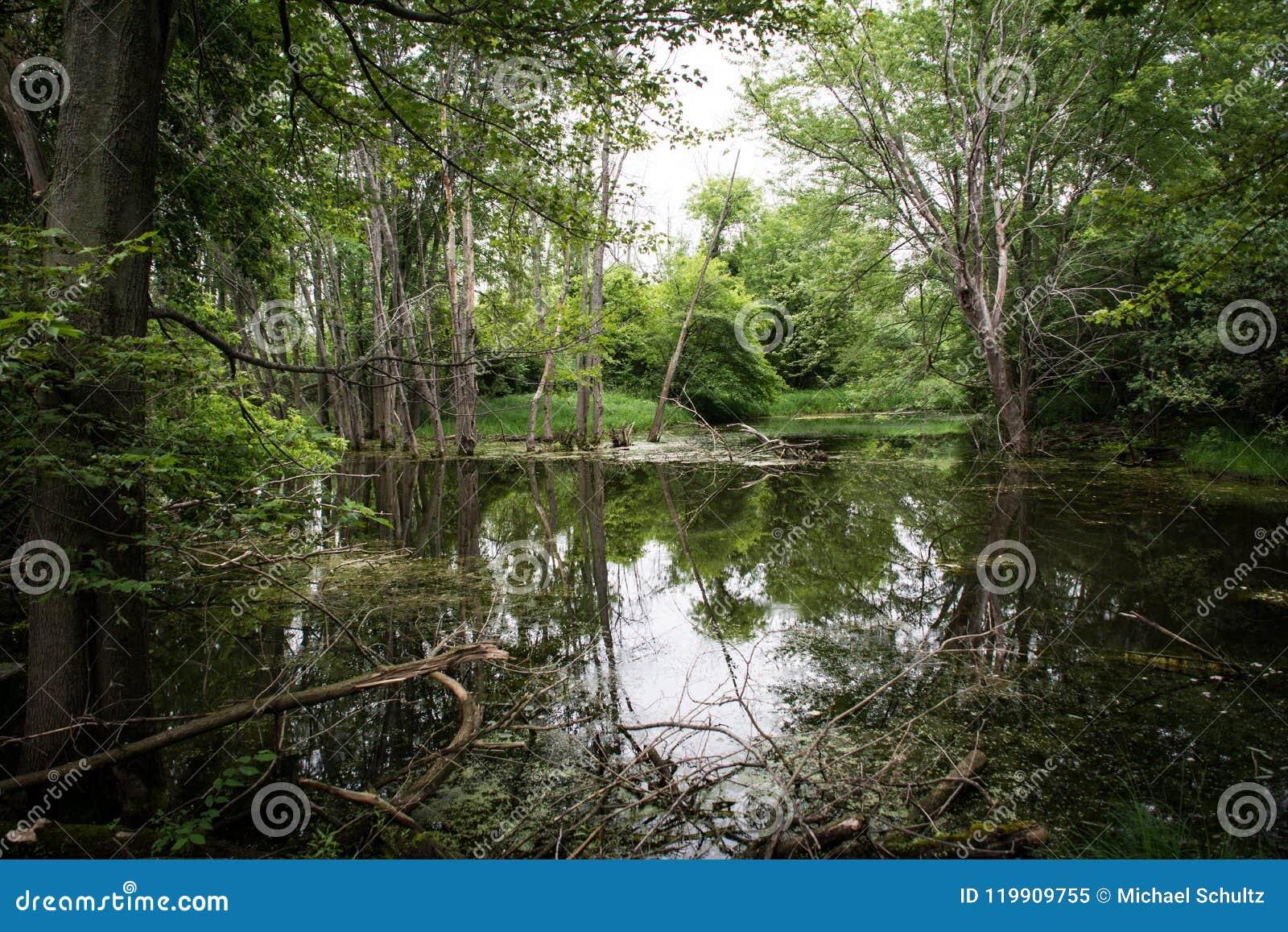 Árboles que reflejan en el agua tranquila