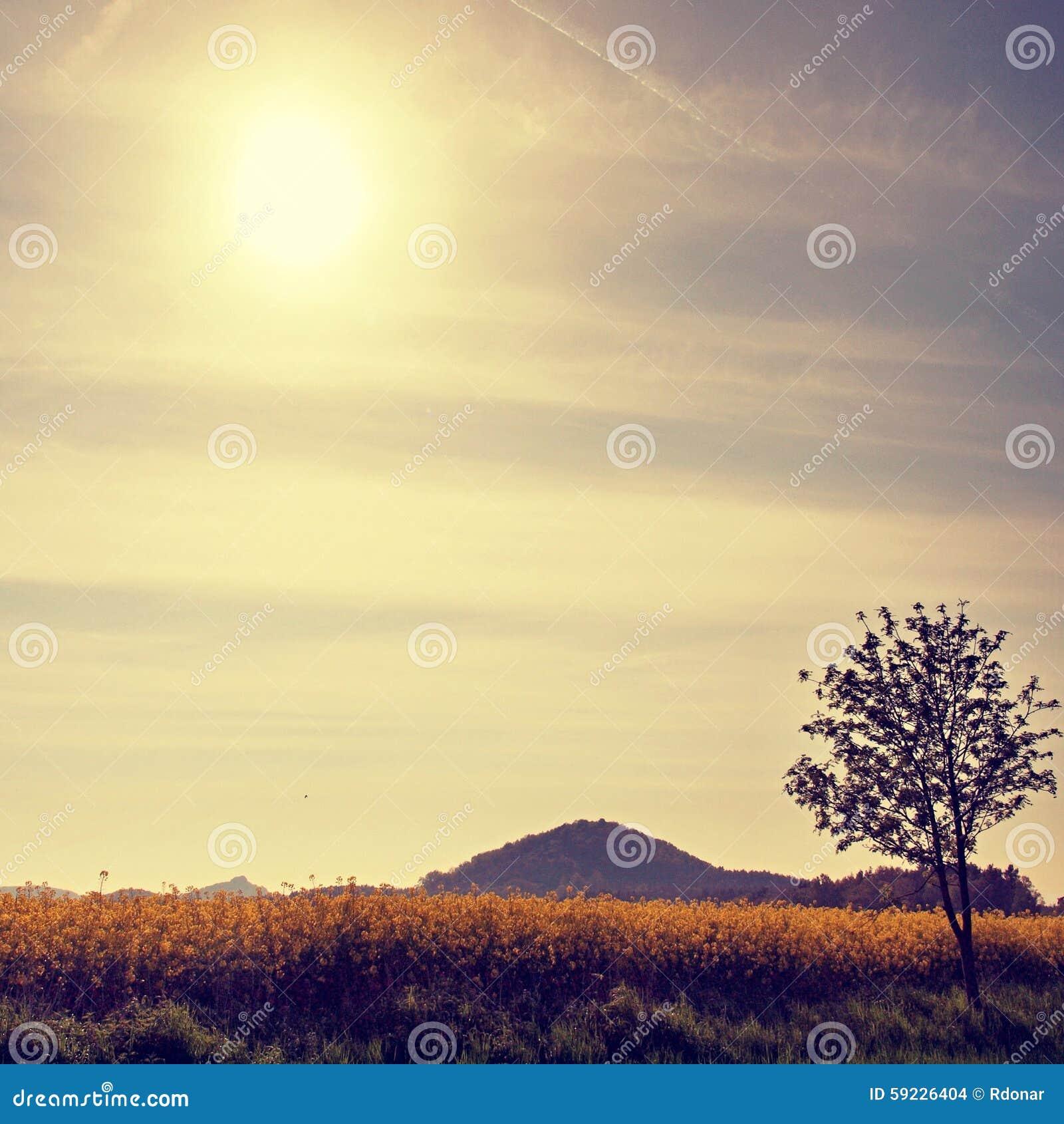 Árboles, tallo de la violación en el campo de violaciones florecientes, la colina aguda del amarillo de la primavera en el horizo