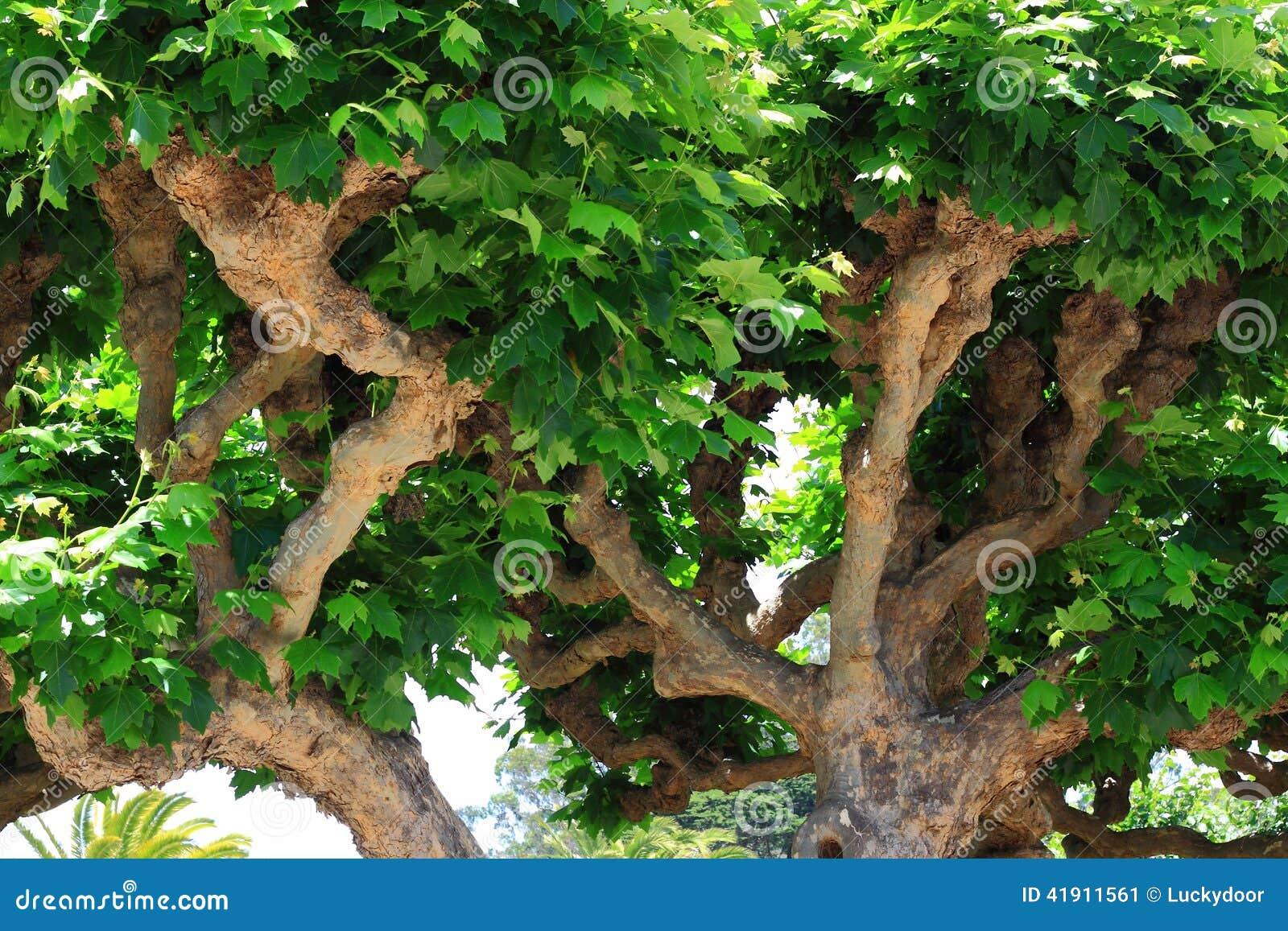 Árboles torcidos