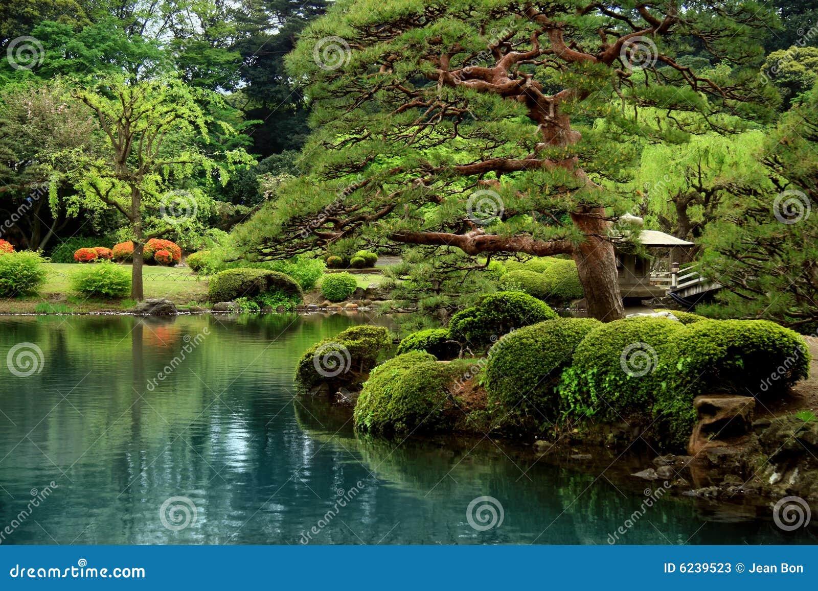 Árboles tranquilos del lago y del bonzai zen