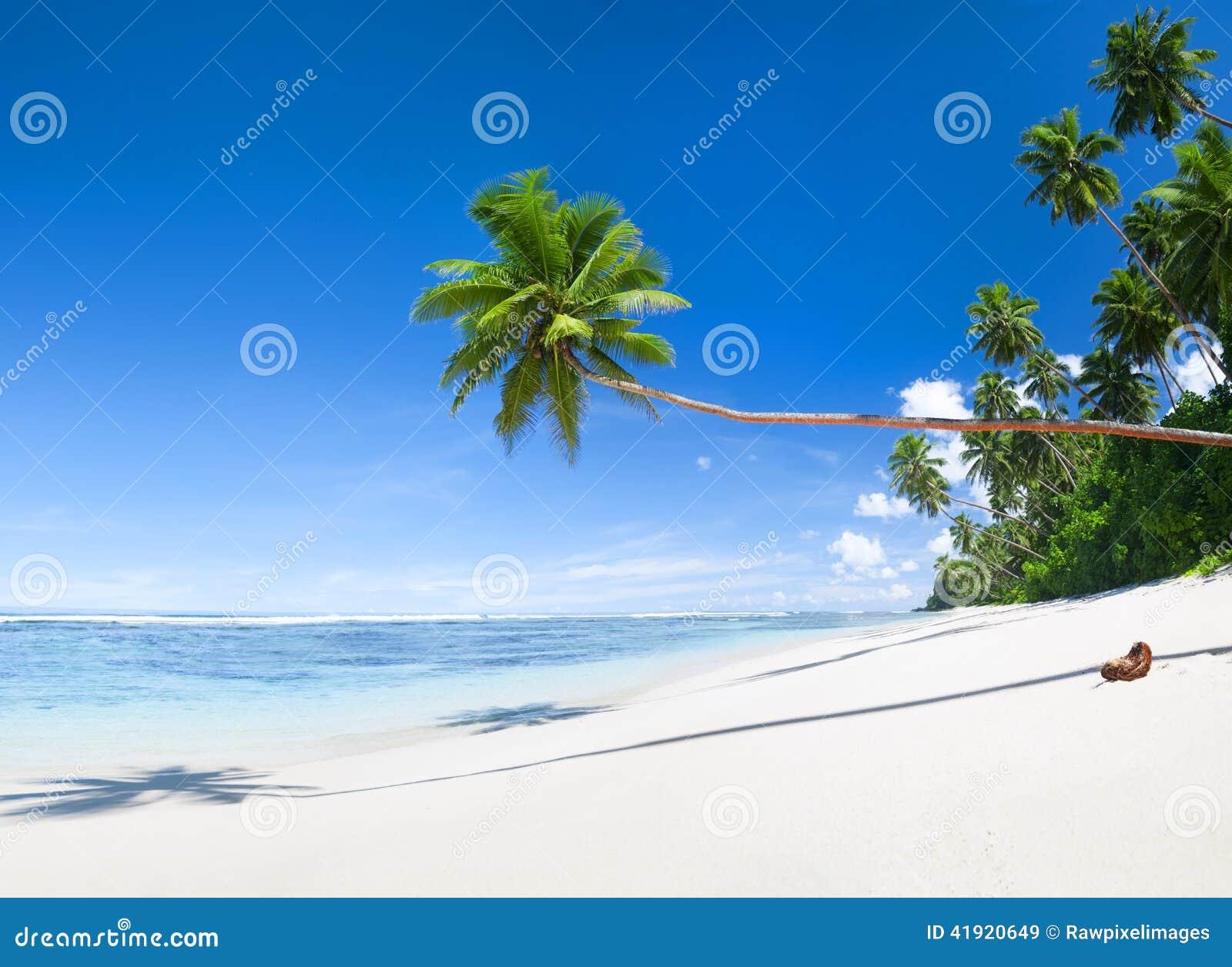 Árboles tropicales de la playa y de coco