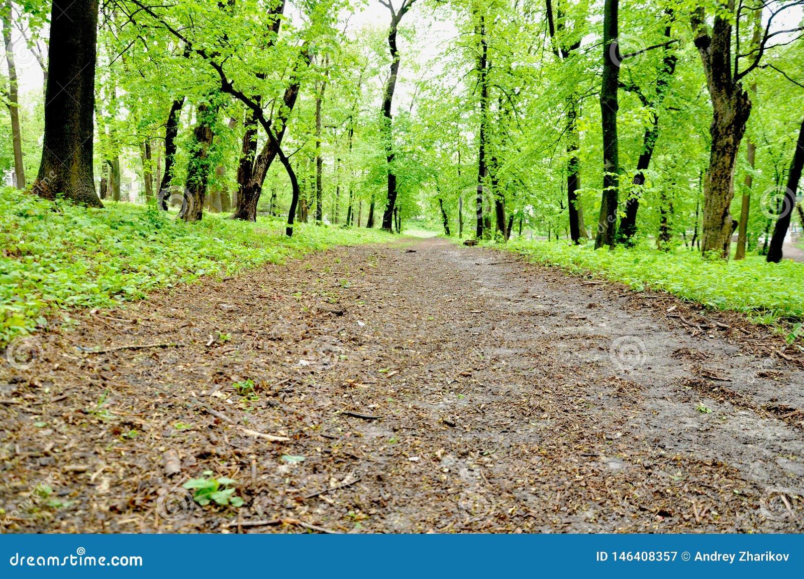 Árboles verdes a ambos lados del camino