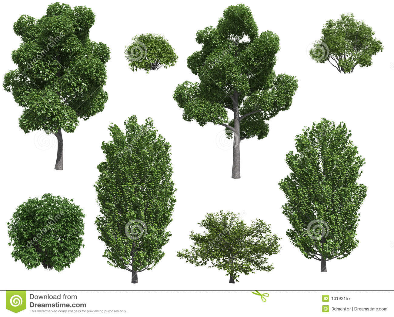 Rboles y arbustos de lamo stock de ilustraci n for Arbustos de jardin fotos