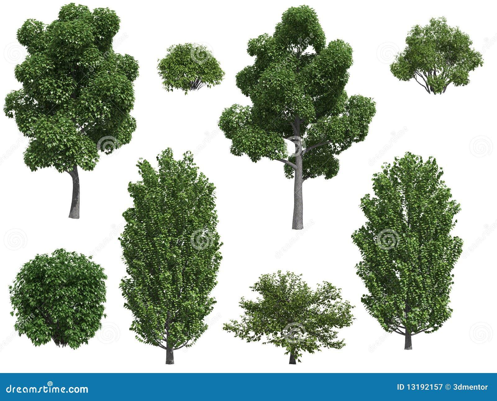 Rboles y arbustos de lamo fotograf a de archivo libre de for Vegetacion ornamental