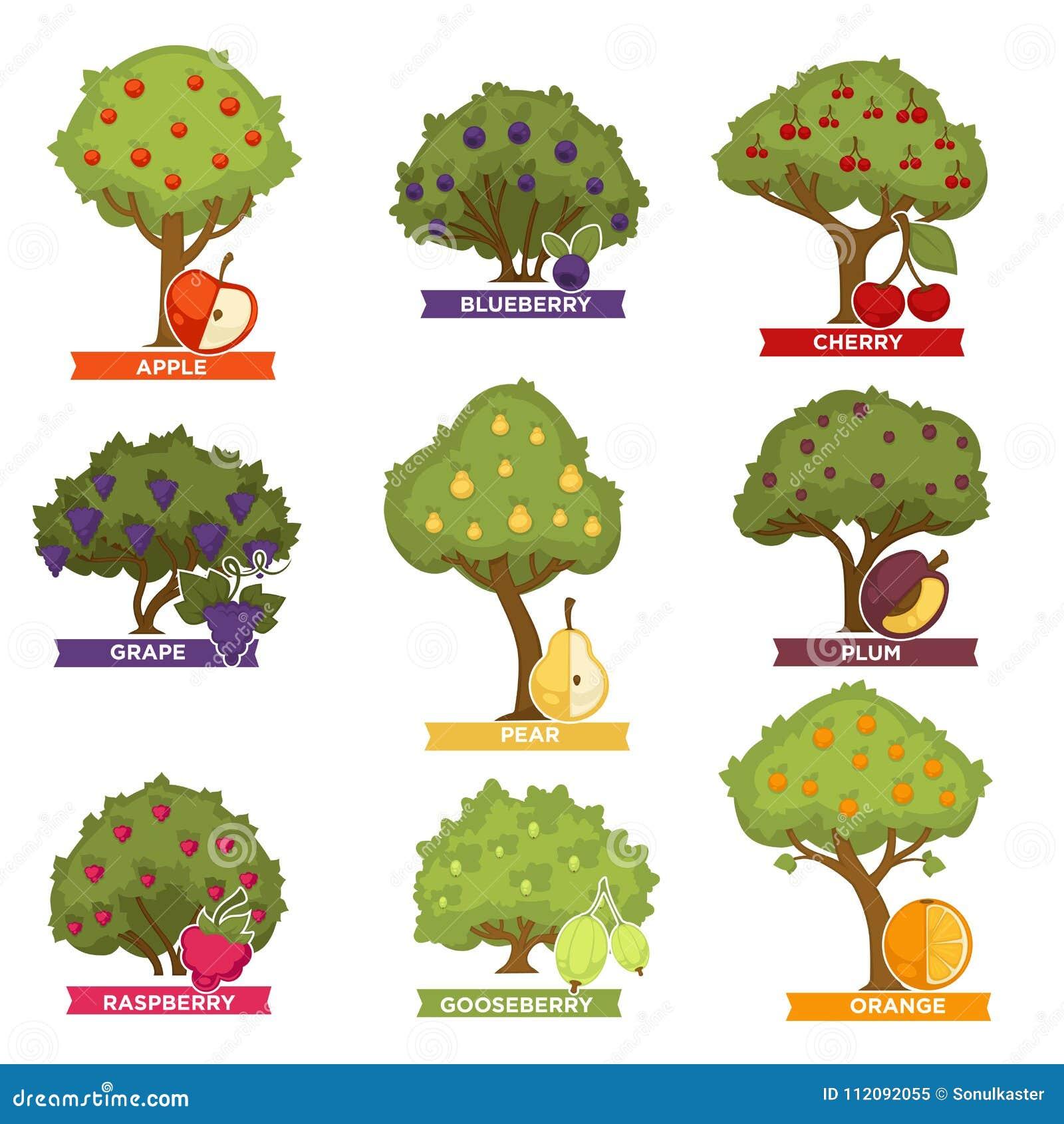 Rboles y arbustos de la huerta con las frutas maduras con - Lista nombre arbustos ...