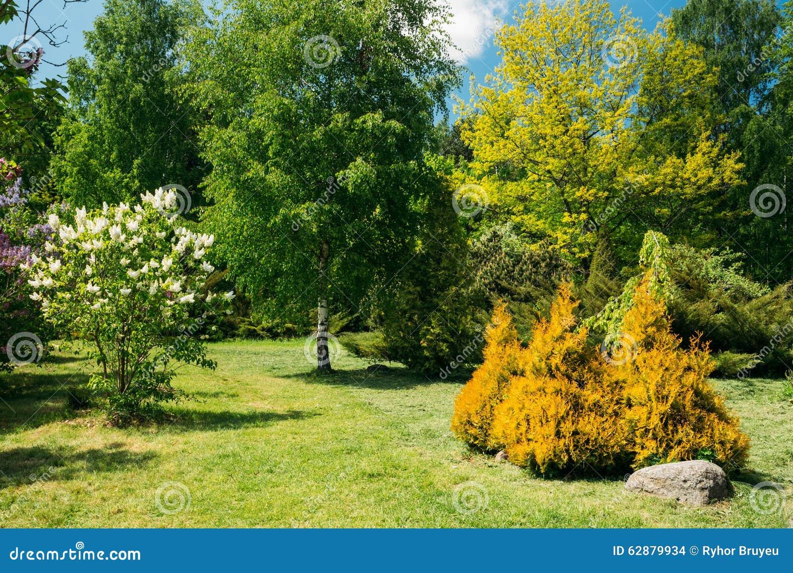 Rboles y arbustos verdes en jard n dise o del jard n foto for Jardines con arboles y arbustos