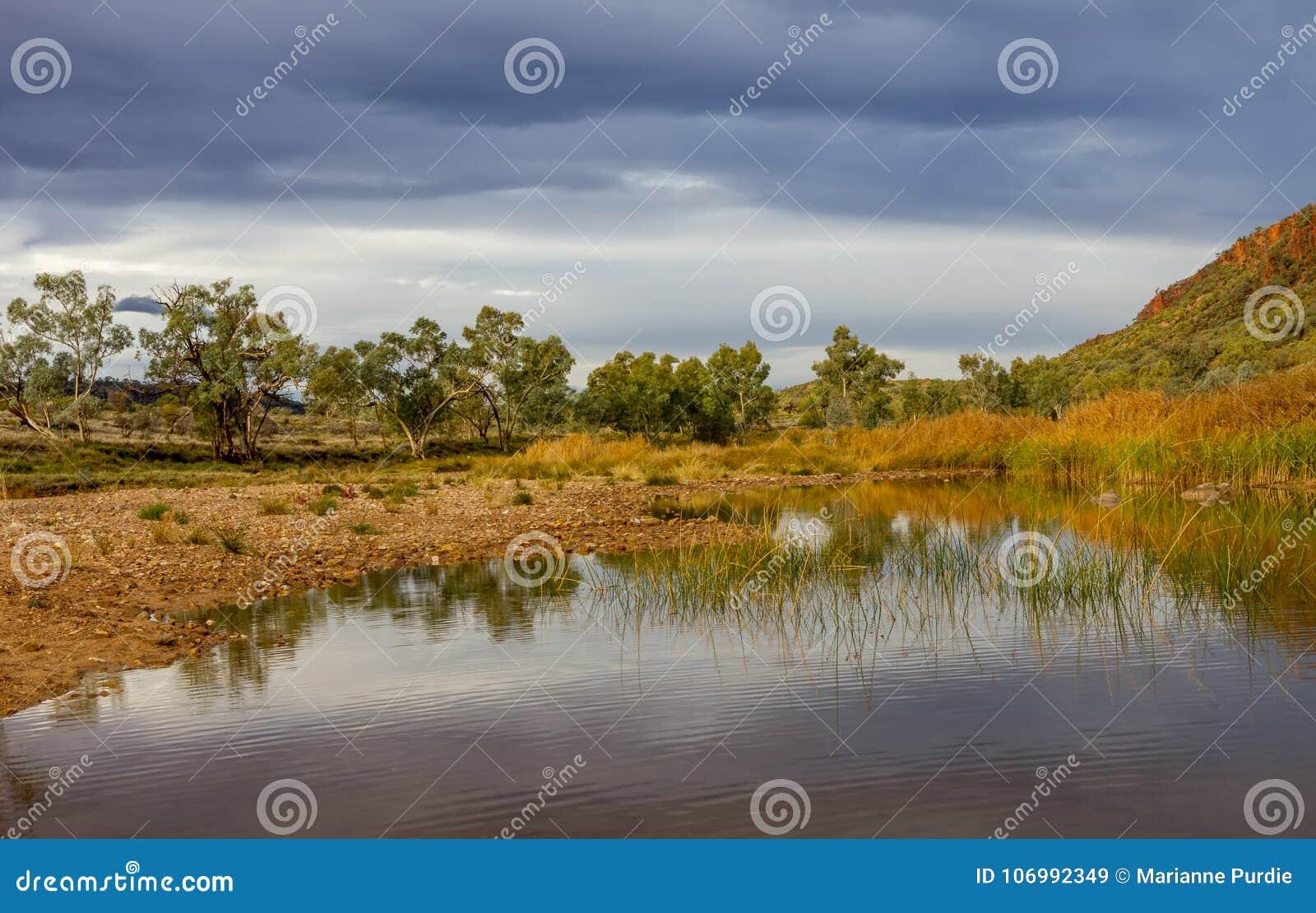 Árboles y cañas de goma en el agujero de agua en Glen Helen Gorge