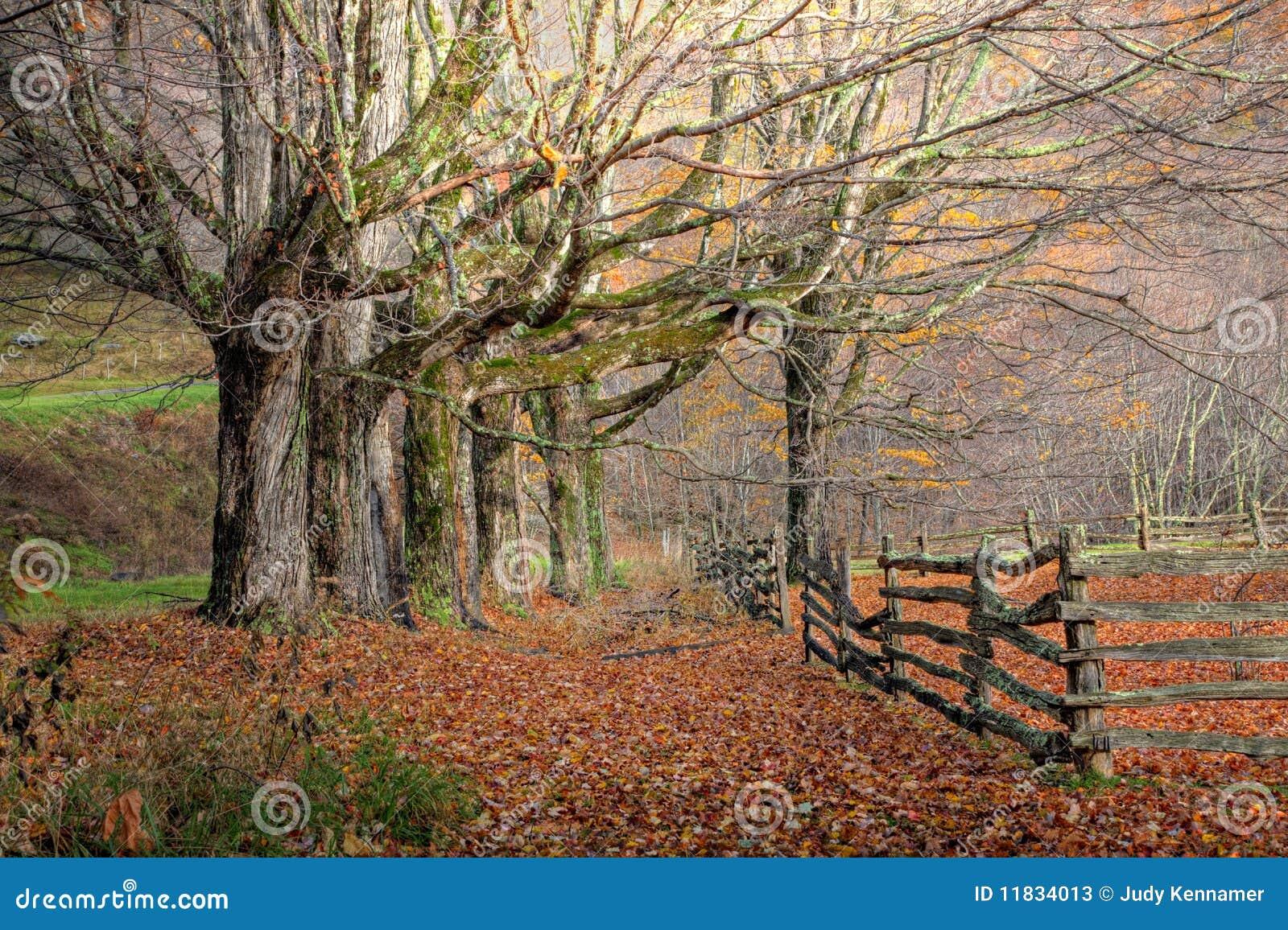 Árboles y cerca del otoño