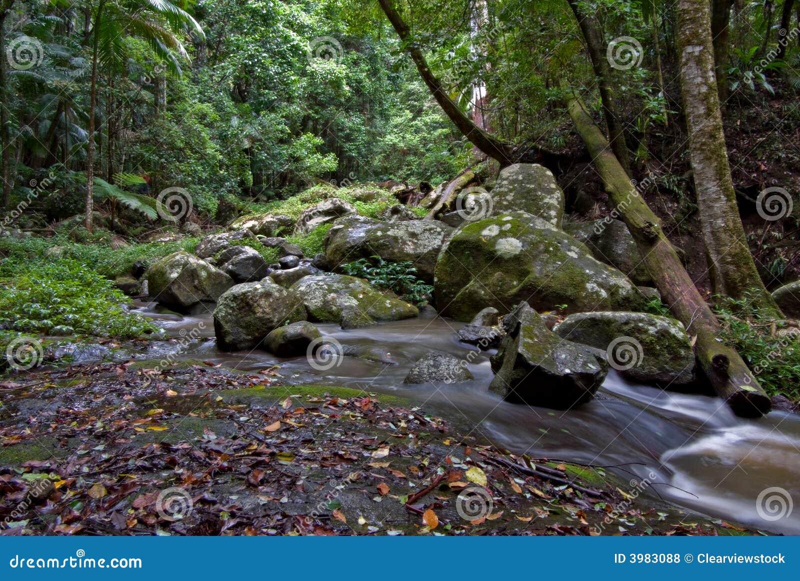 Árboles y secuencia de la selva tropical