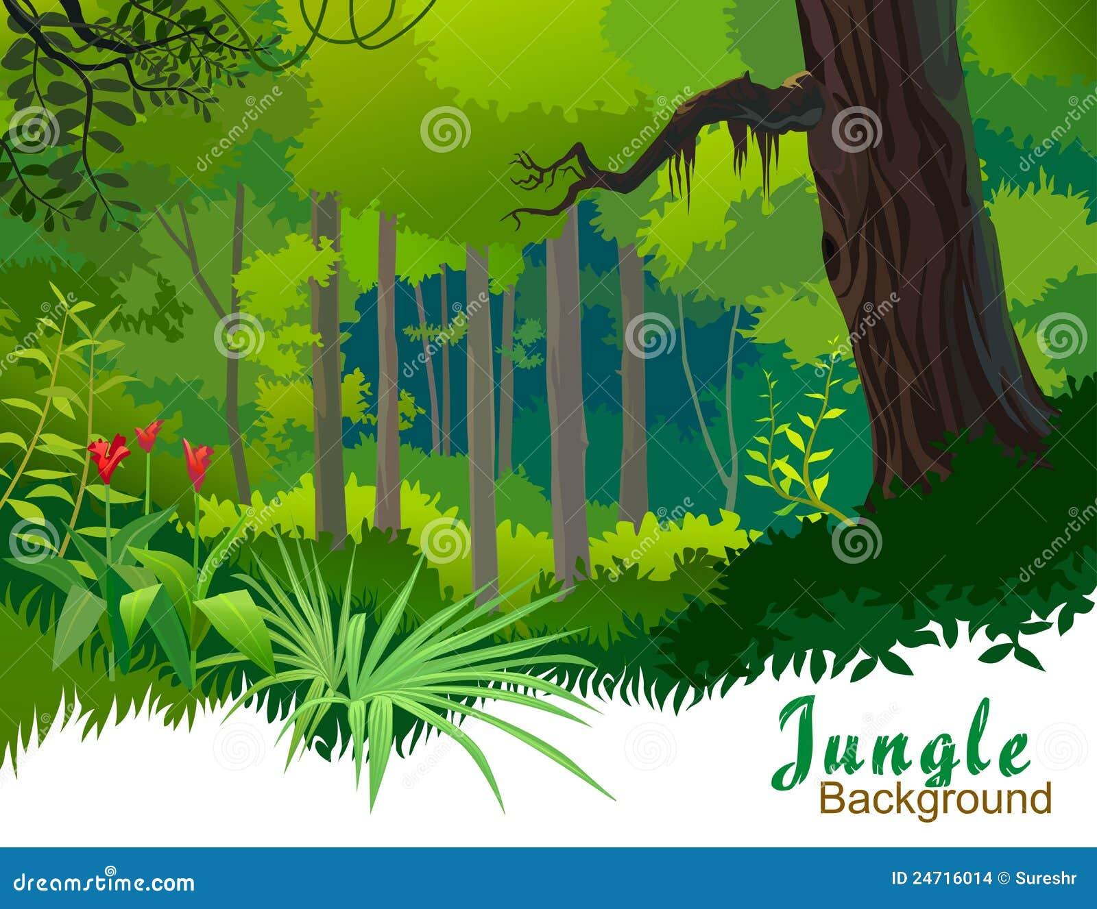 Árboles y yermo de la selva del Amazonas