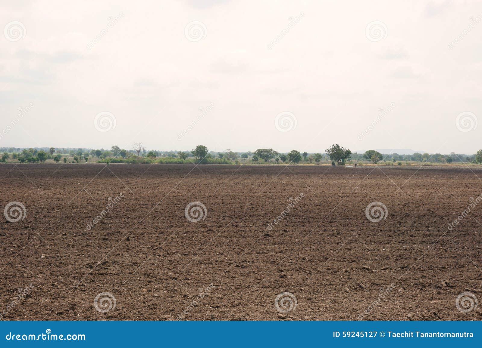 Área cultivada