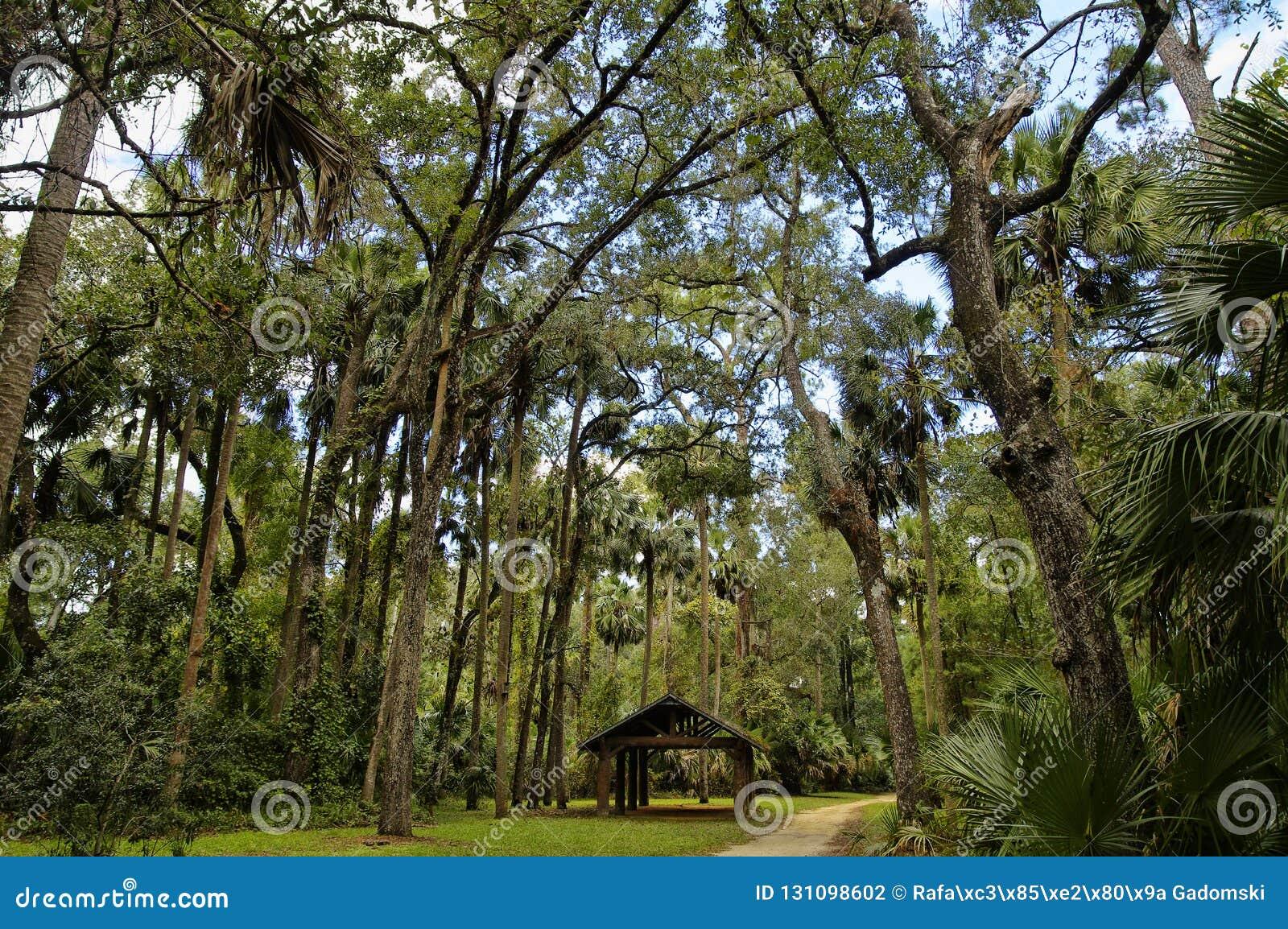 A área de recreação na floresta nacional de Ocala situada em Juniper Springs Florida