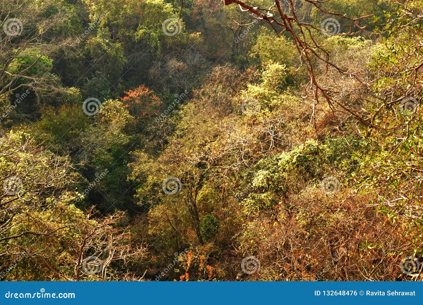 Área del bosque en Bombay la India