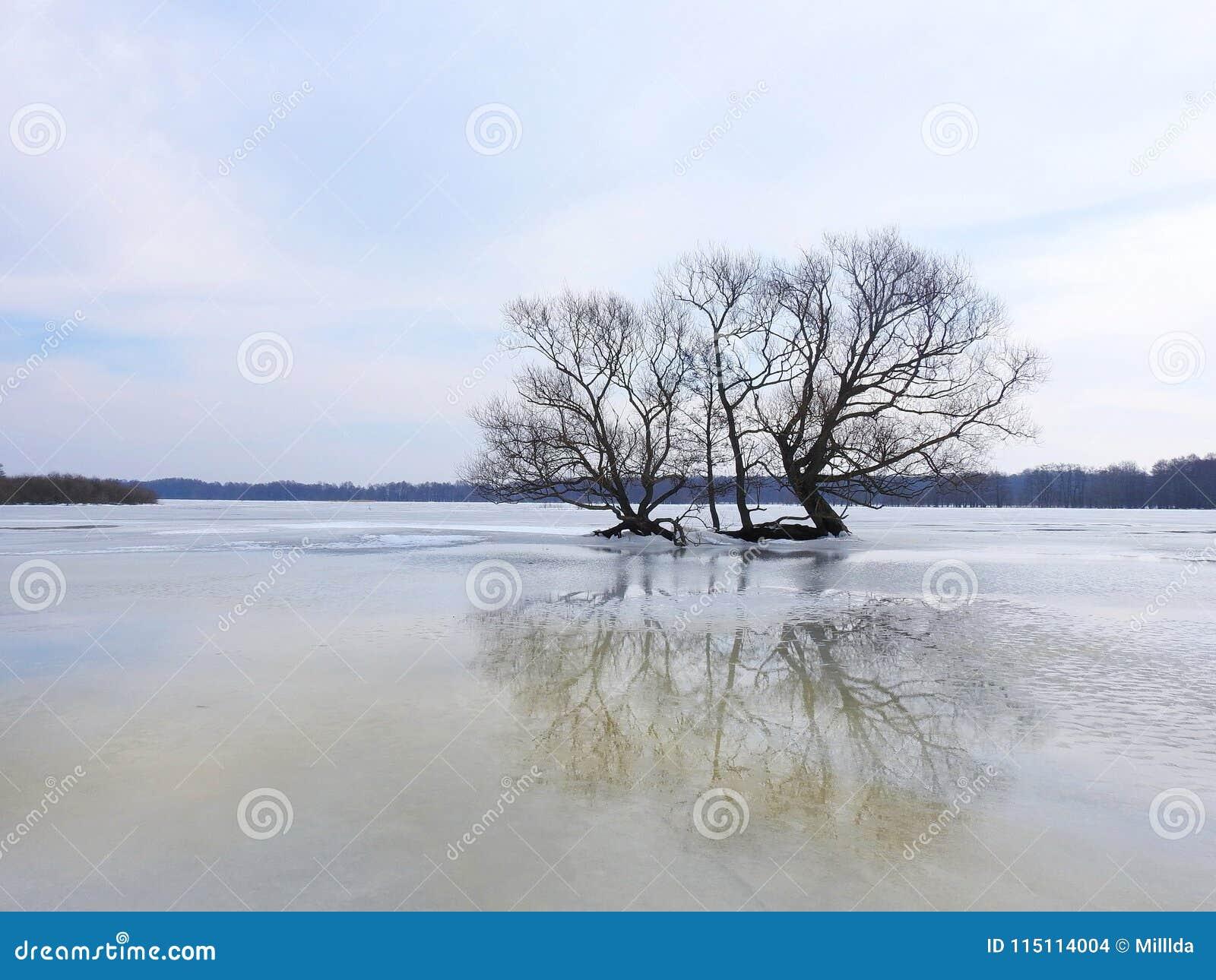 Árvore agradável no campo de inundação, Lituânia