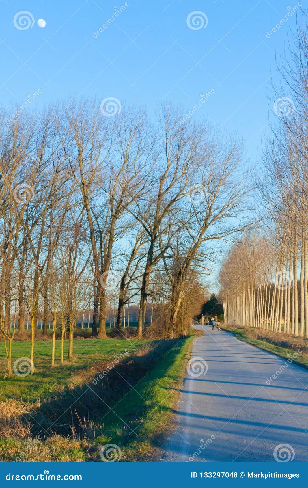 A árvore alinhou a estrada no por do sol do campo com a lua