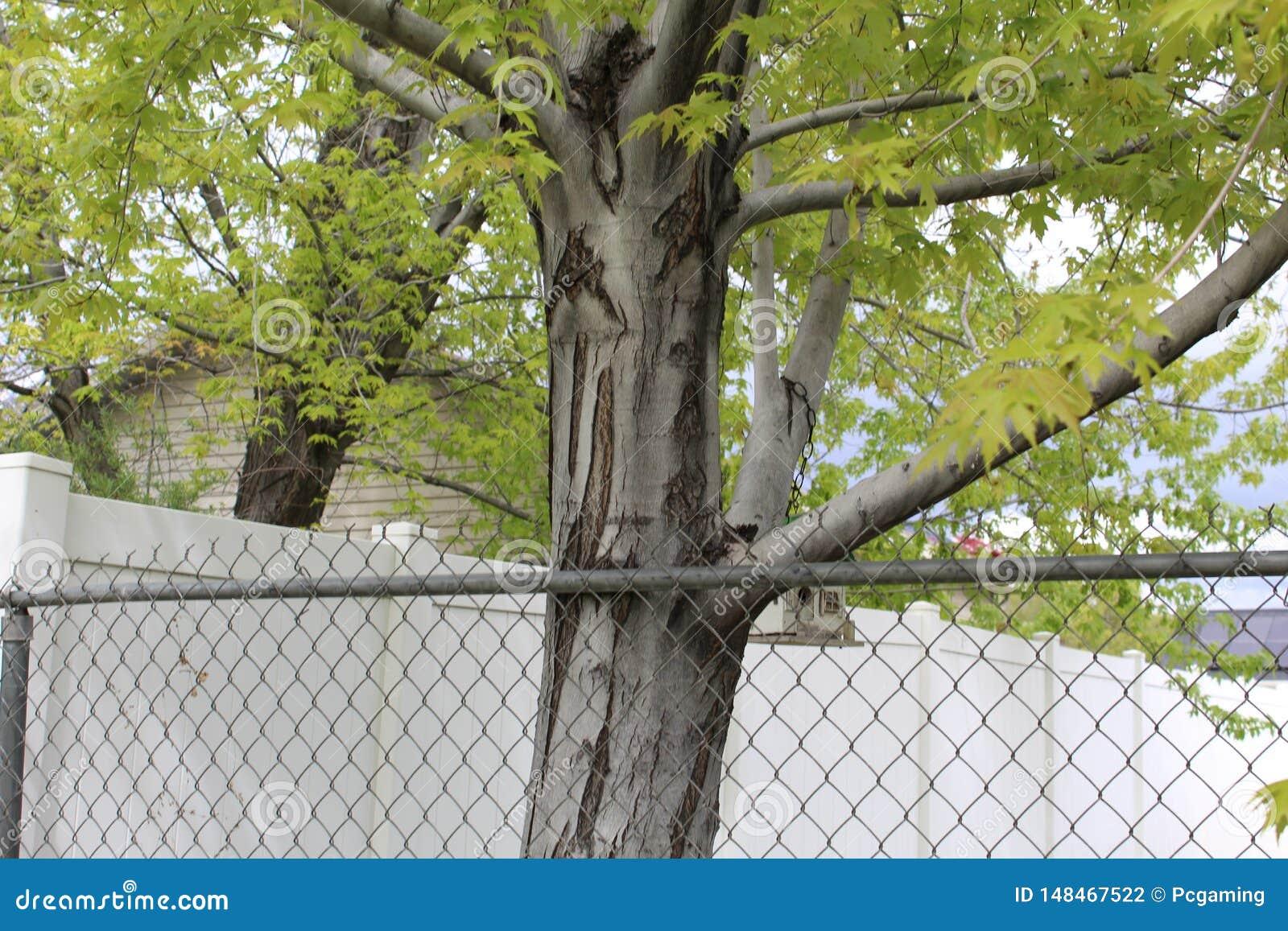 Árvore amarela cercada