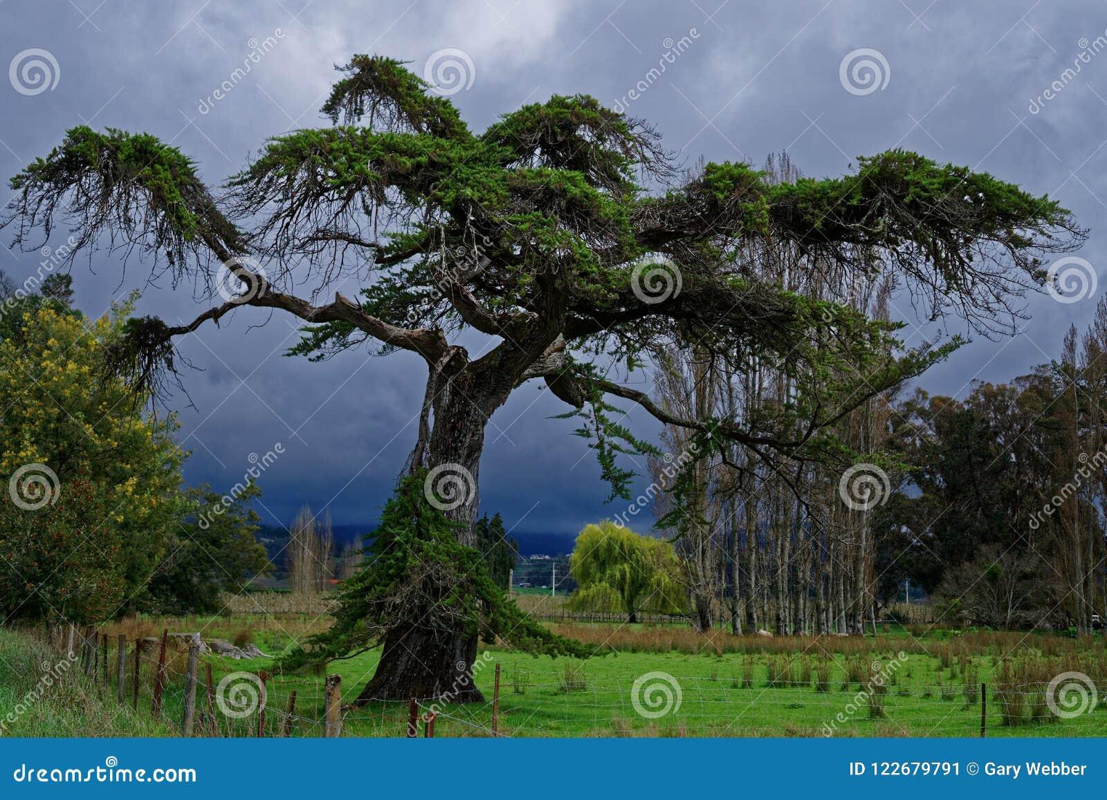 Árvore assustador com céu tormentoso atrás