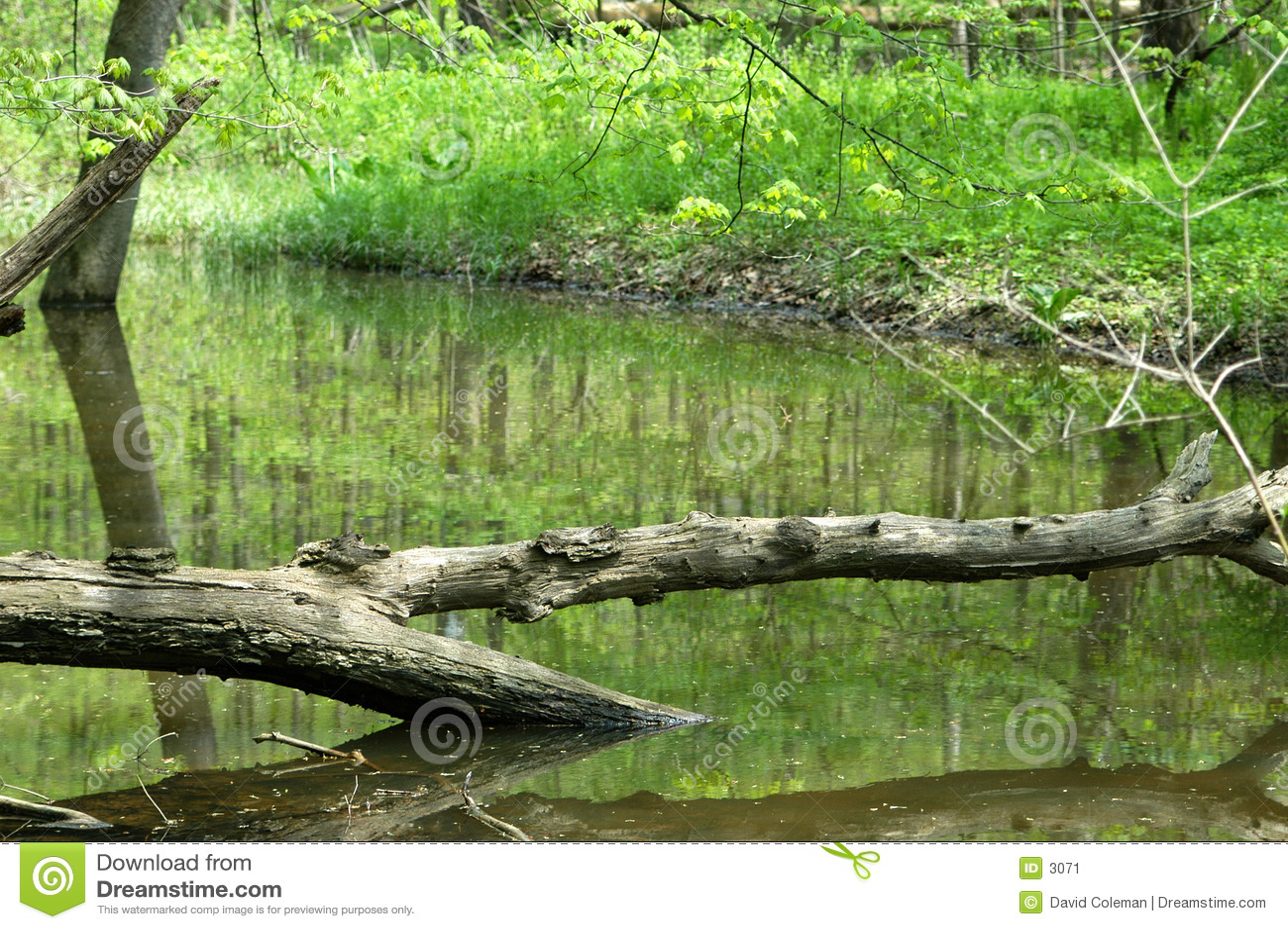 Árvore através da água
