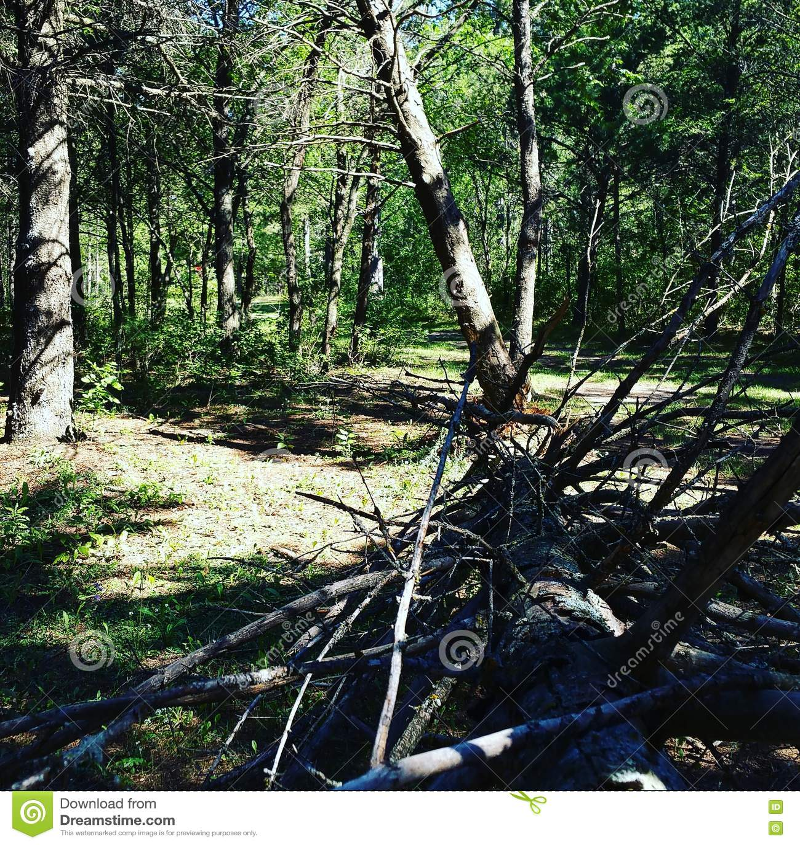 Árvore caída