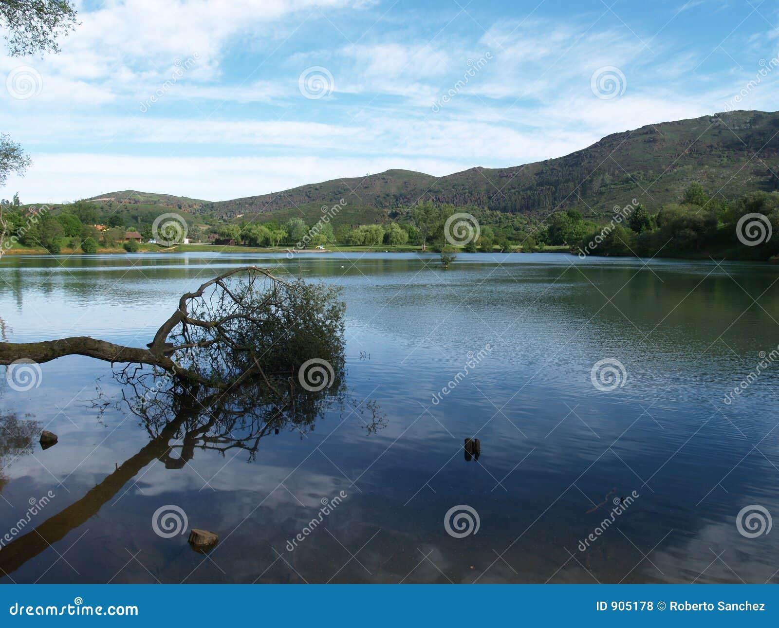 Árvore caída sobre o lago