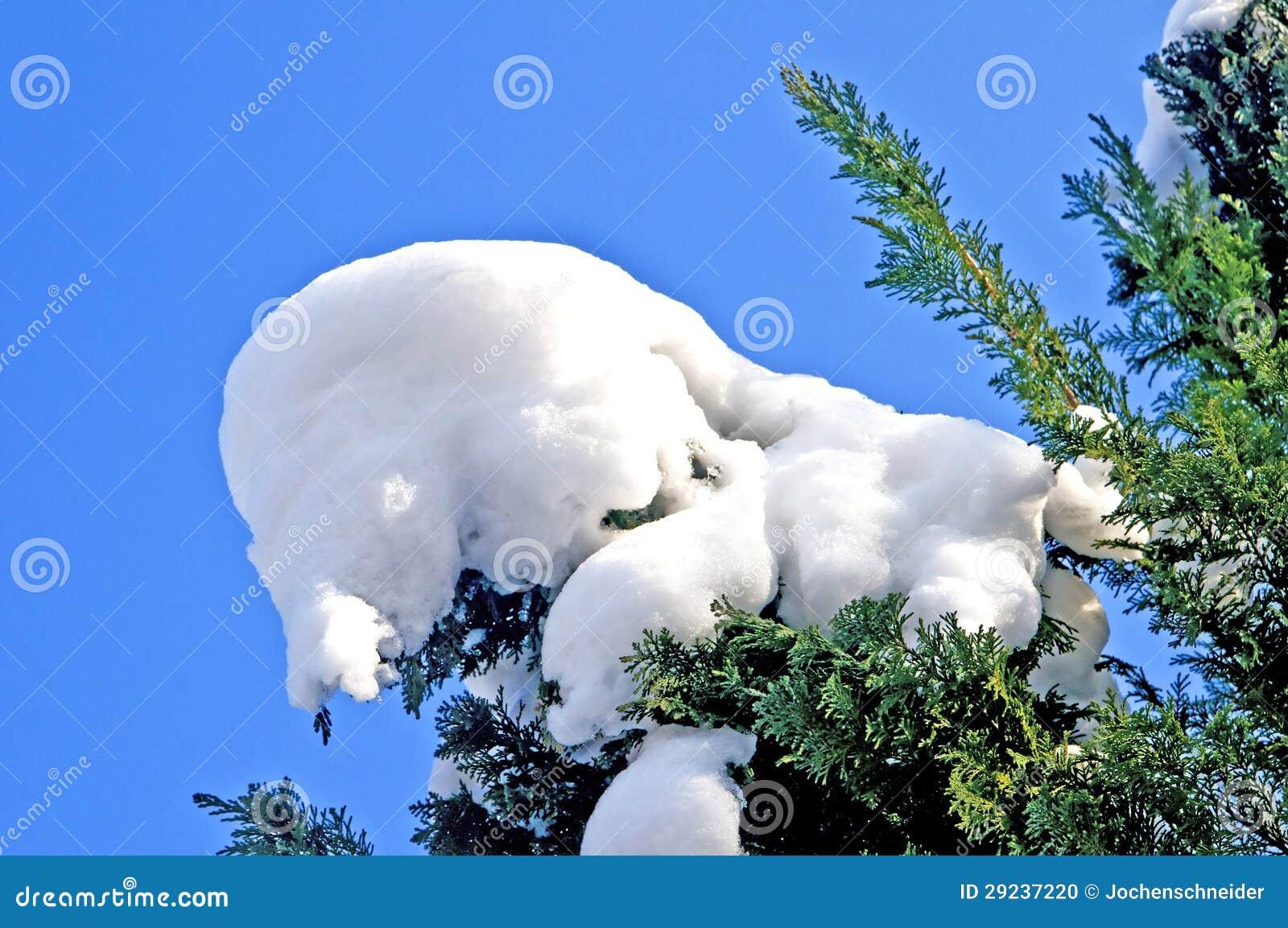 Download Árvore com neve foto de stock. Imagem de frosty, campo - 29237220