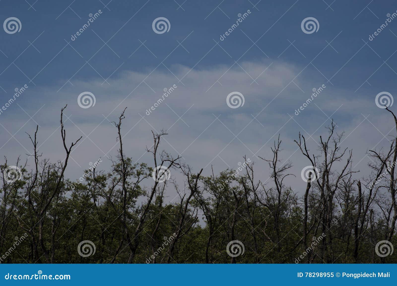 Árvore com o céu azul da nuvem