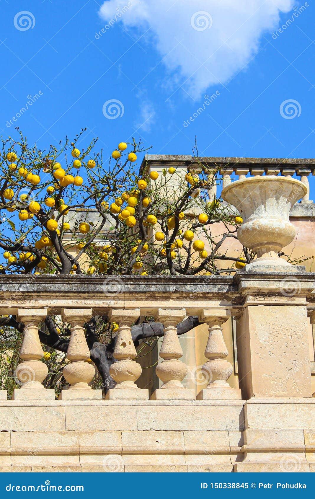 Árvore com os limões maduros no balcão medieval no quadrado de Piazza Duomo em Siracusa, Sicília, Itália O quadrado histórico pri