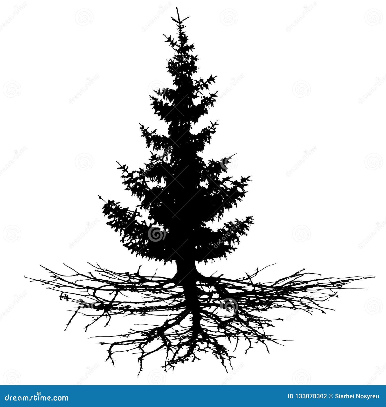 Árvore com raizes, silhueta das coníferas do vetor