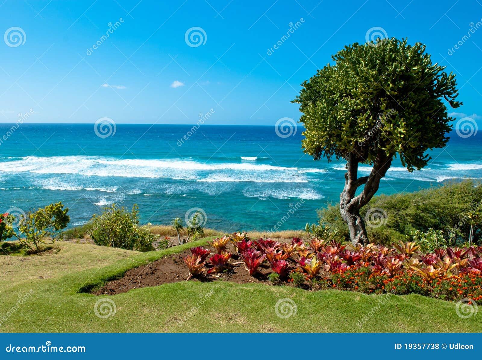 Árvore da praia de Honolulu