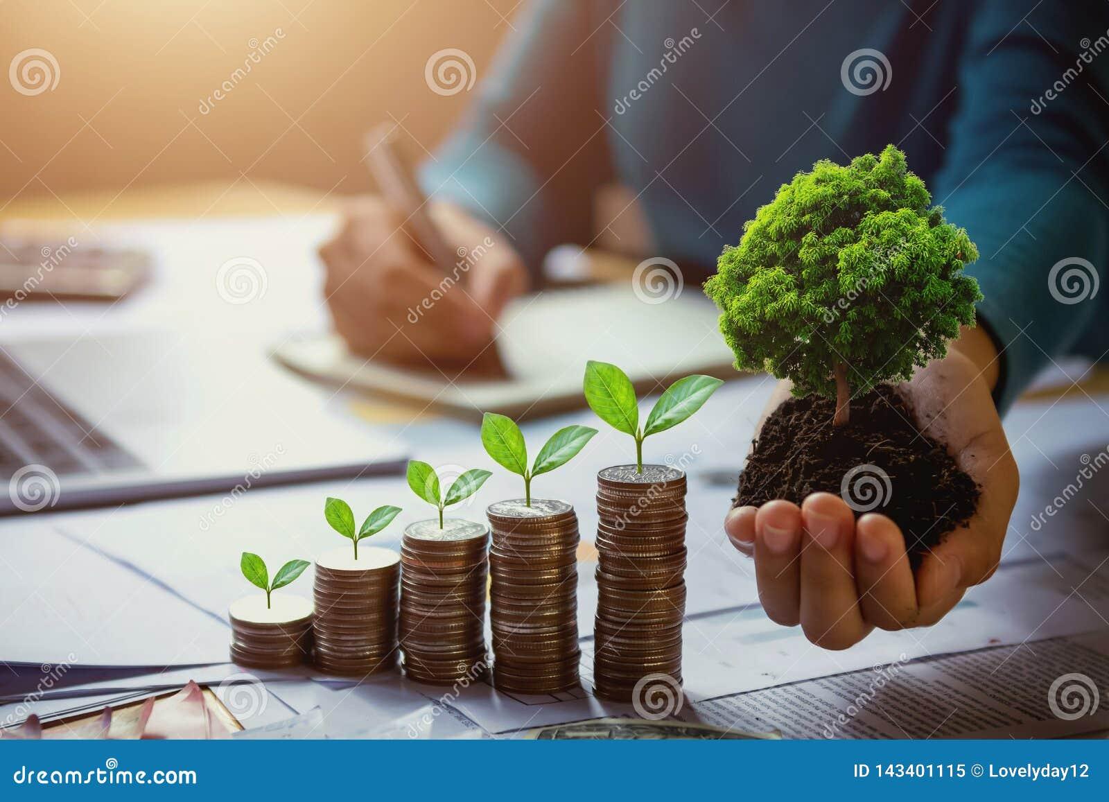 árvore da terra arrendada da mão da mulher de negócio com a planta que cresce em moedas dinheiro e terra de salvamento do conceit