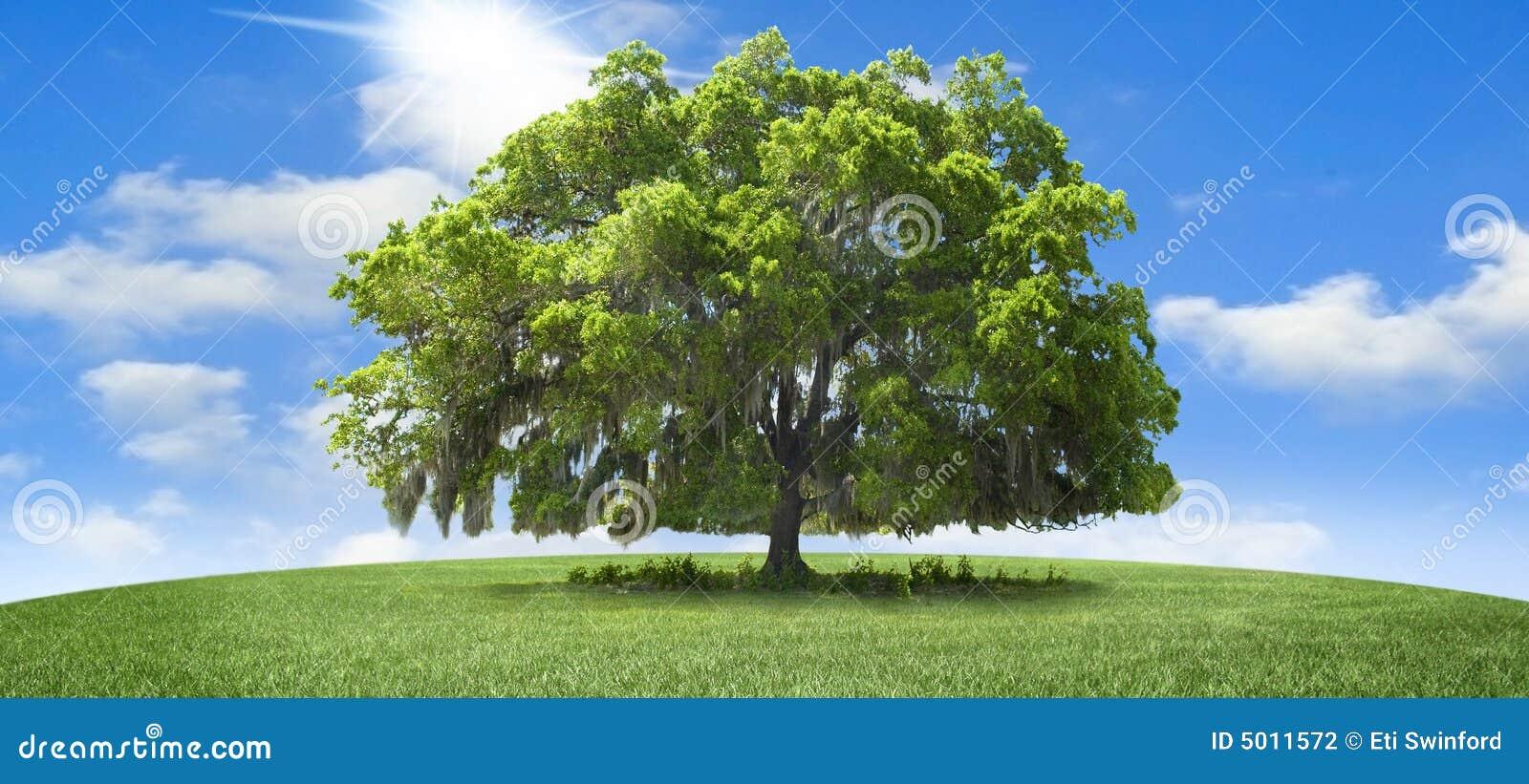 Árvore de carvalho