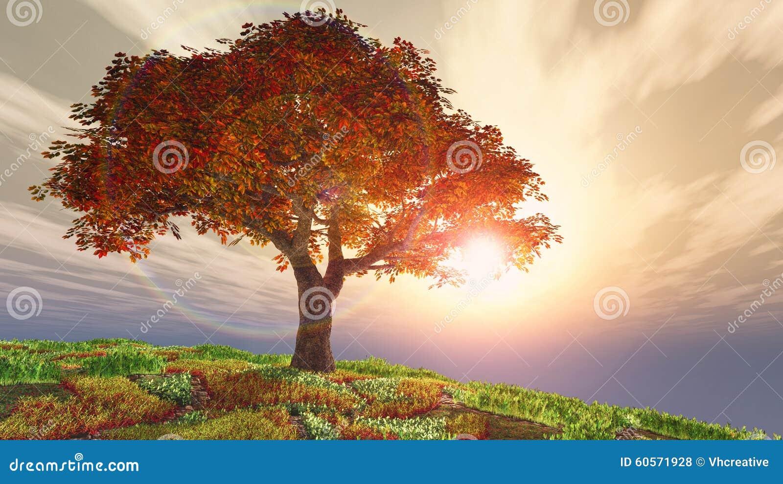 Árvore de cereja do outono no monte contra o sol