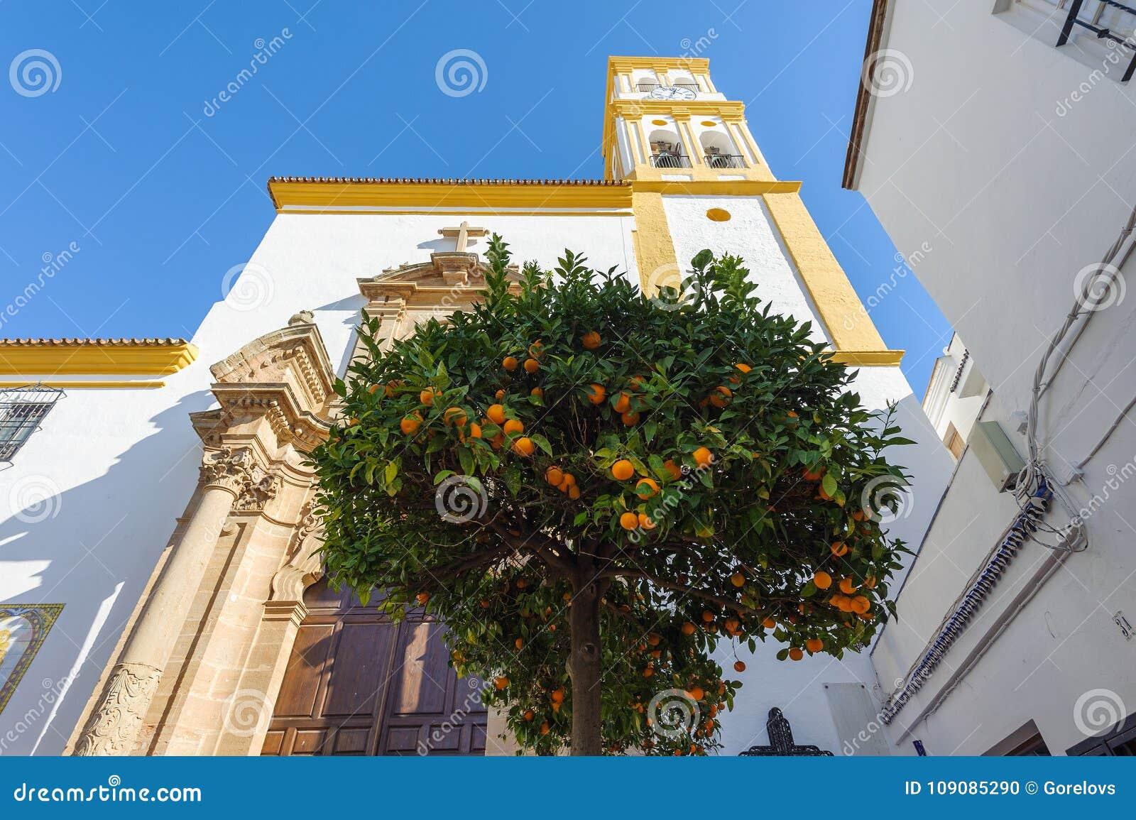 Árvore de citrino com laranjas e igreja em um fundo Marbella, Spain