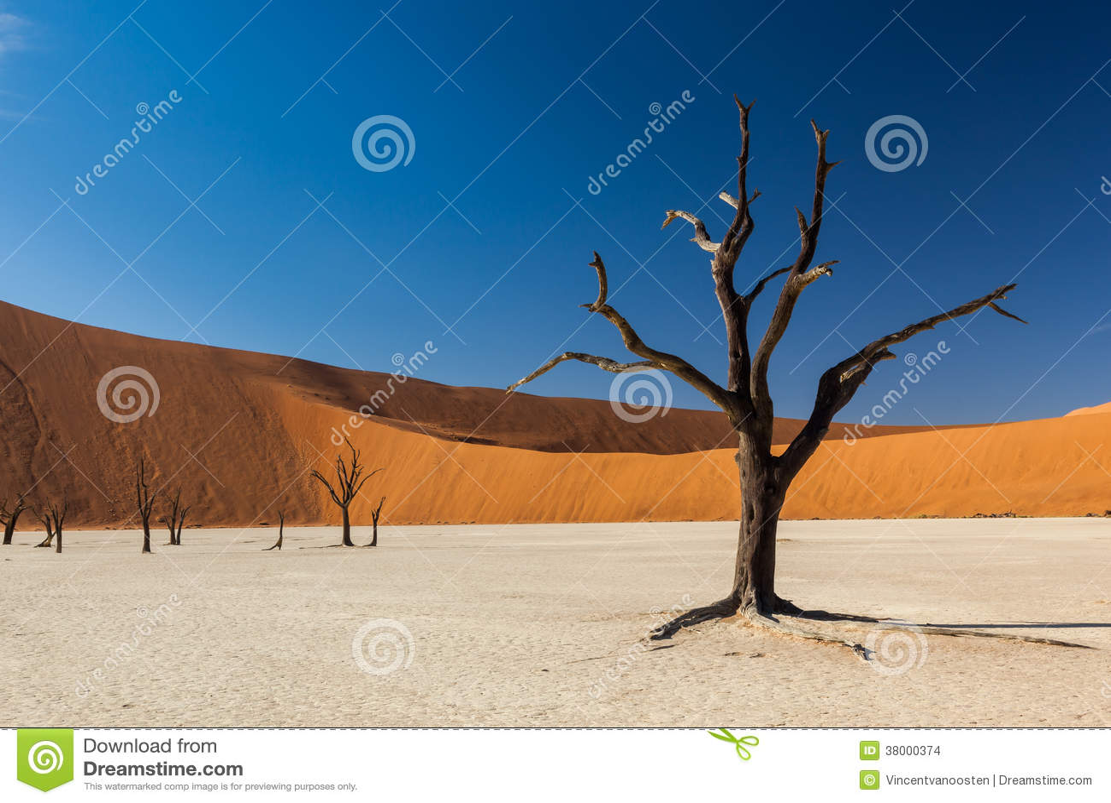Árvore de Deadvlei