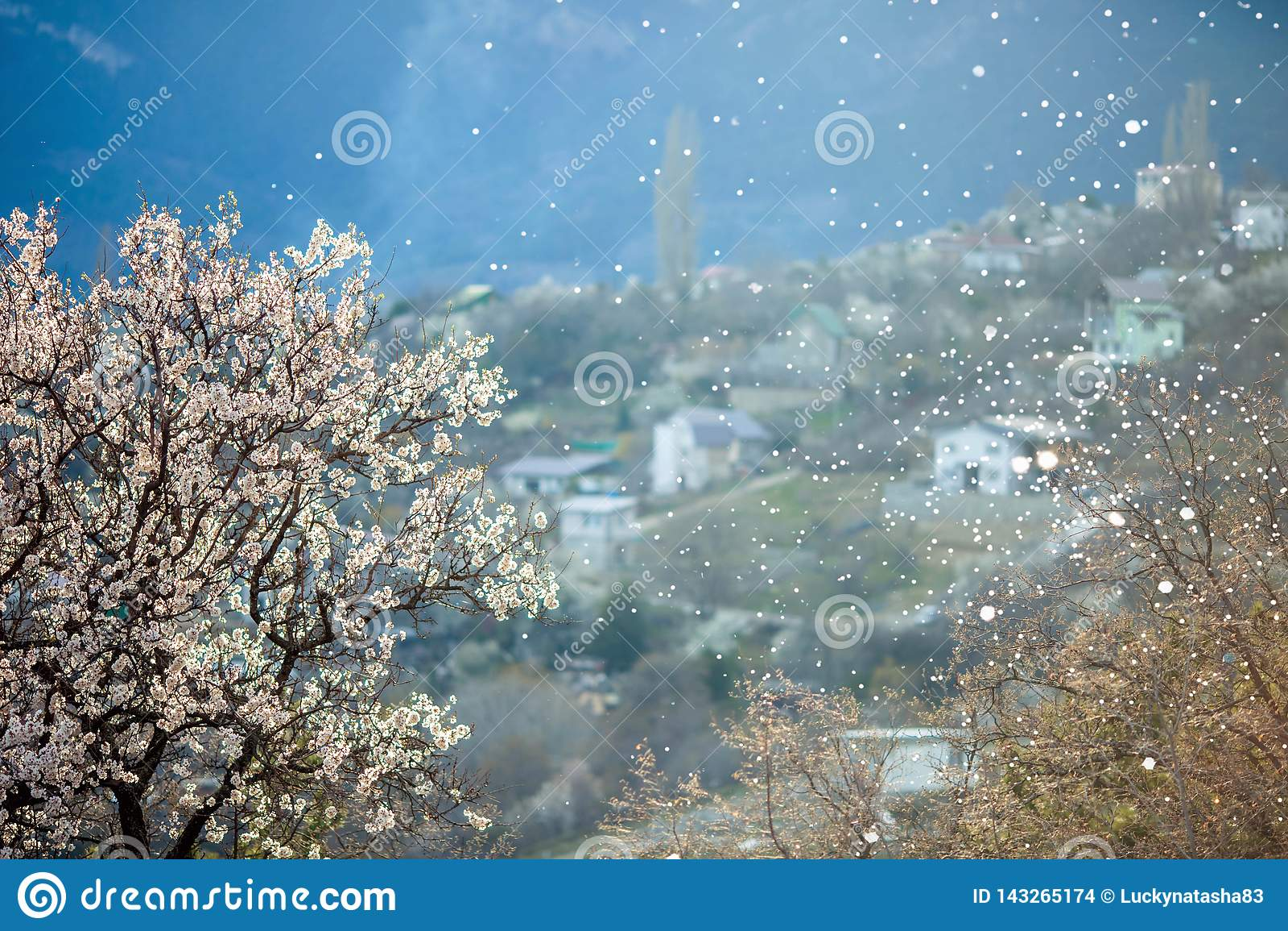 Árvore de florescência da mola e neve de queda com uma vista pitoresca da vila nas montanhas